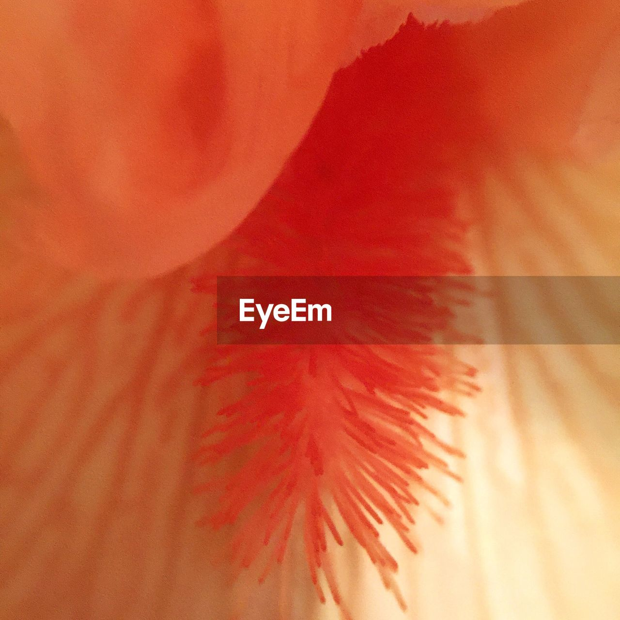 abstract, backgrounds, close-up, full frame, fragility, red, no people, nature, flower, indoors, flower head, day, freshness