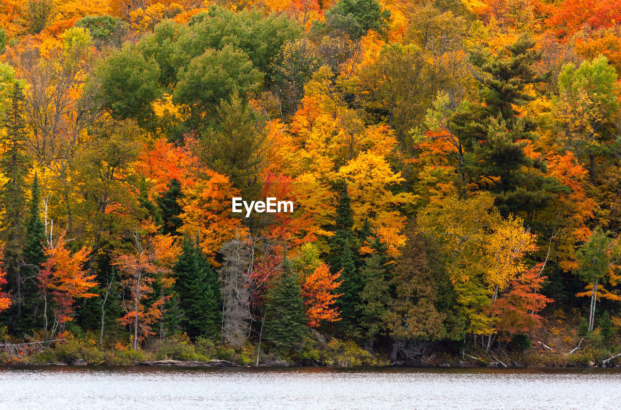 SCENIC VIEW OF AUTUMN TREES IN FOREST