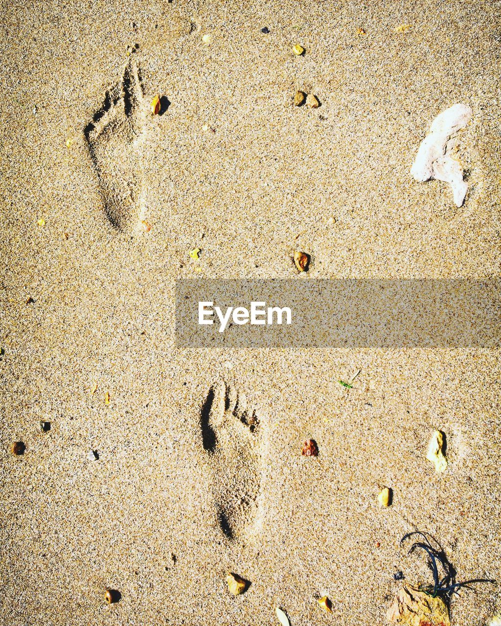 sand, land, beach, high angle view, nature, no people, footprint, day, full frame, sunlight, backgrounds, outdoors, paw print, directly above, print, close-up, tranquility, pattern, animal, track - imprint