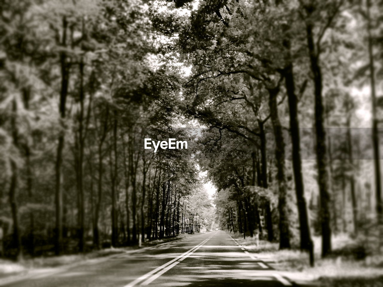 tree, the way forward, road, tree trunk, transportation, no people, day, nature, outdoors, beauty in nature