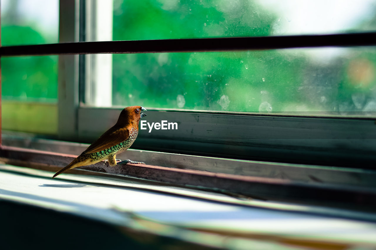 animal themes, animal, one animal, vertebrate, animals in the wild, animal wildlife, bird, window, perching, no people, selective focus, day, glass - material, outdoors, transparent, close-up, metal, focus on foreground, green color, small