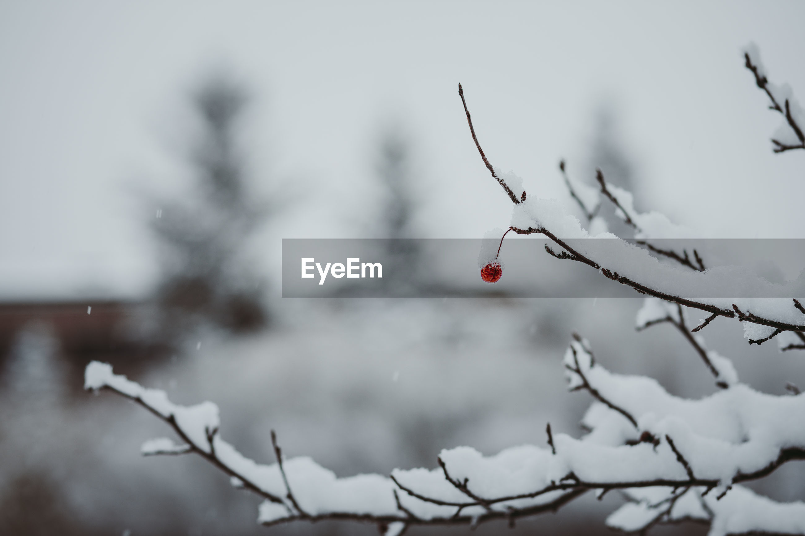 Close-up of snowy bare tree