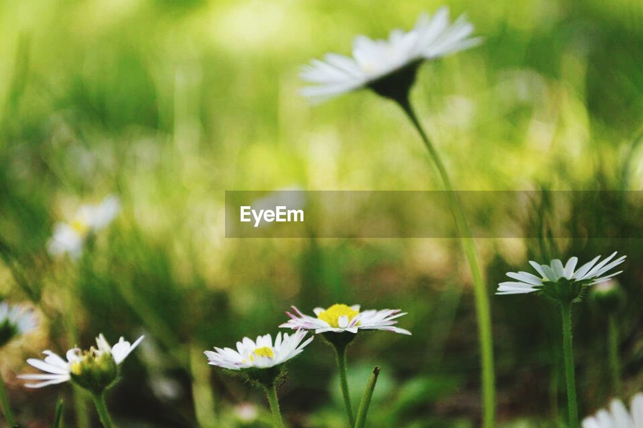 flower, nature, fragility, growth, plant, petal, outdoors, day, flower head, beauty in nature, no people, freshness, close-up, grass, blooming