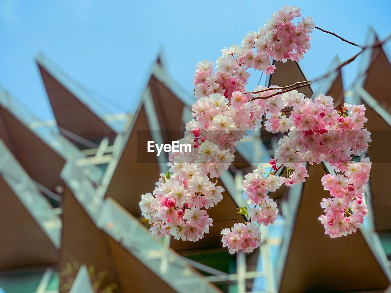 flowering plant, flower, plant, freshness, fragility, vulnerability, architecture, nature, built structure, no people, day, focus on foreground, building exterior, growth, pink color, building, beauty in nature, close-up, house, outdoors, flower head