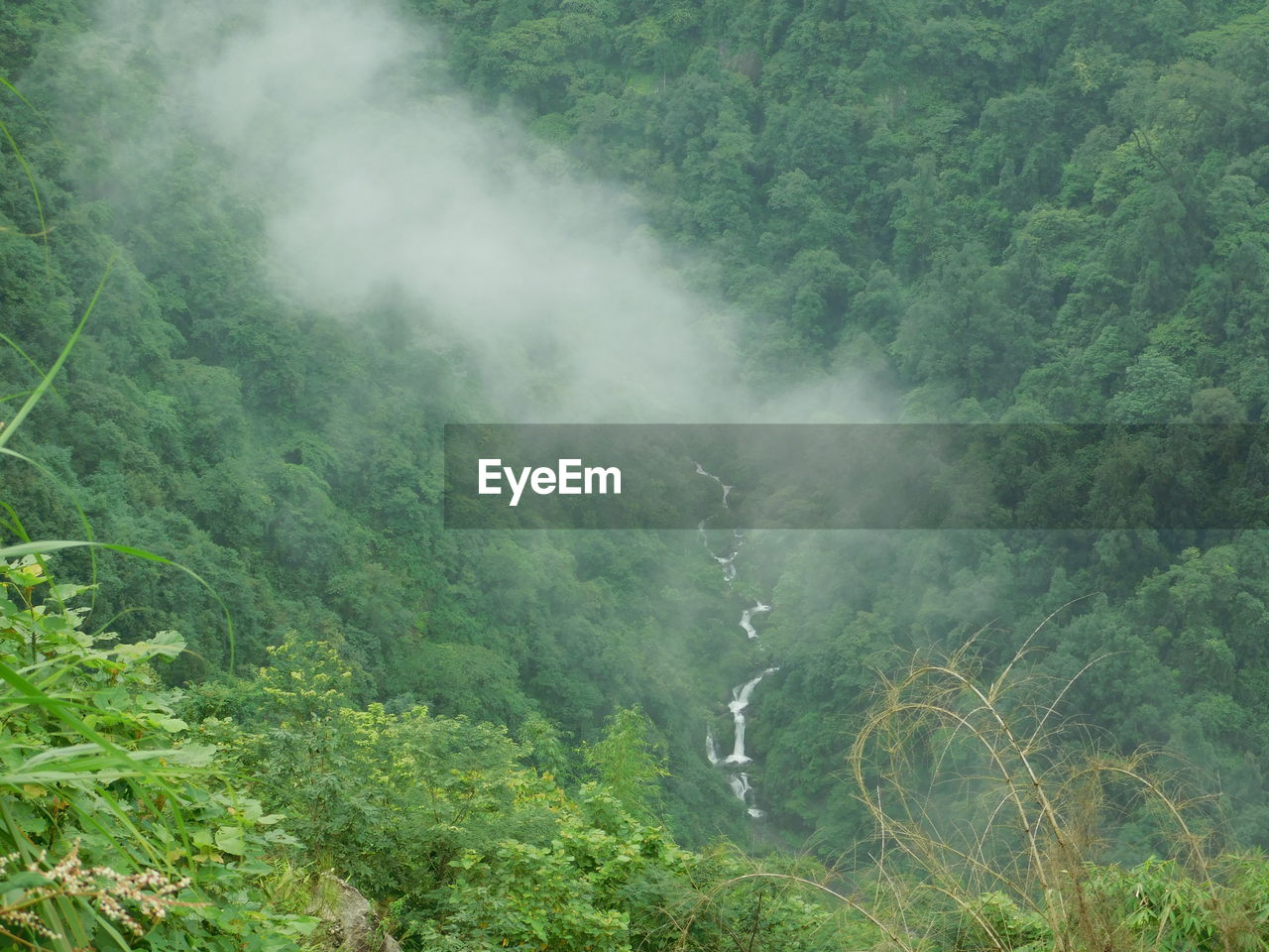 plant, tree, land, scenics - nature, beauty in nature, nature, no people, forest, green color, environment, fog, growth, mountain, tranquility, tranquil scene, day, non-urban scene, outdoors, lush foliage, rainforest