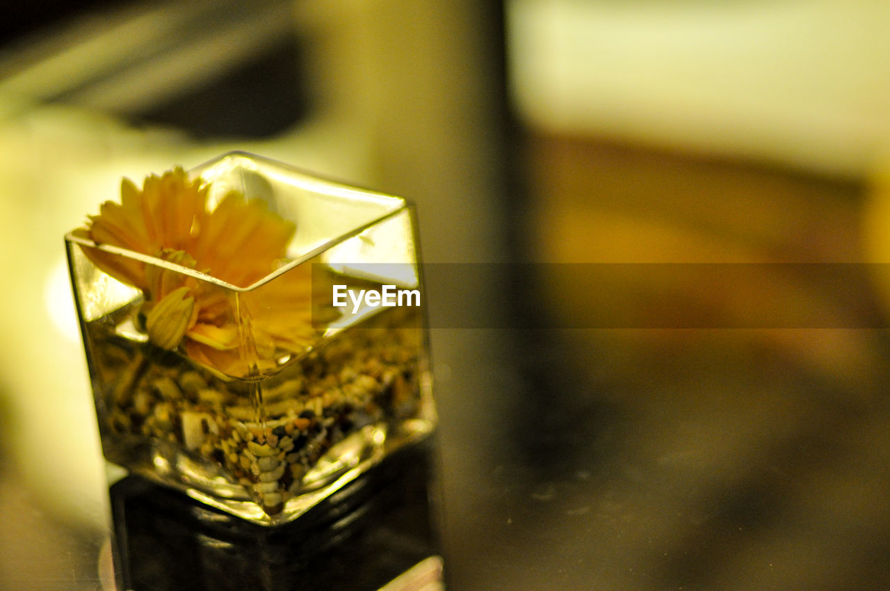 indoors, close-up, table, no people, drink, selective focus, food and drink, drinking glass, alcohol, freshness, day