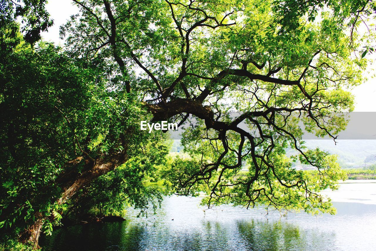tree, plant, water, growth, nature, tranquility, beauty in nature, river, branch, no people, day, scenics - nature, green color, tranquil scene, outdoors, forest, waterfront, tree trunk
