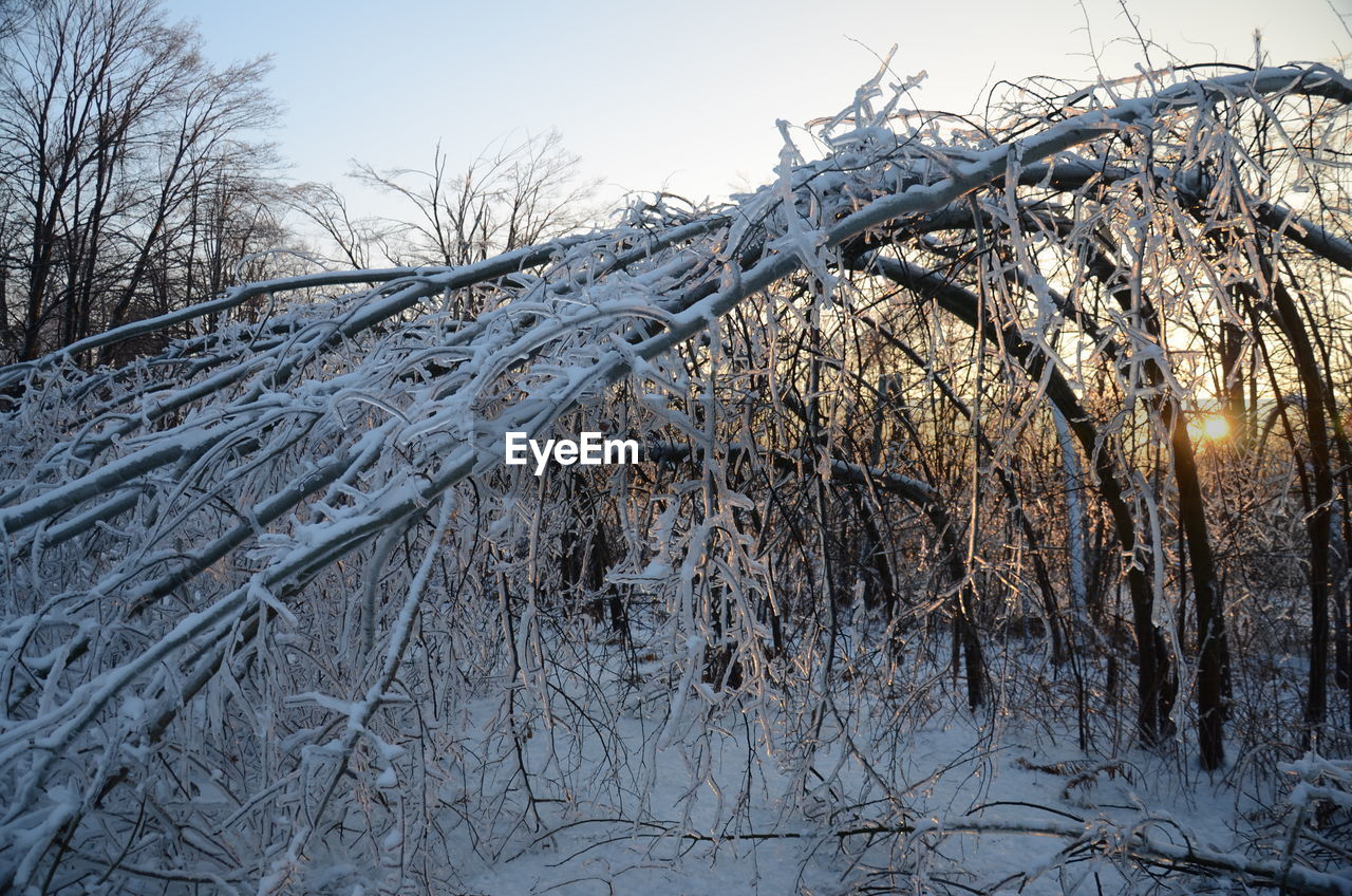 winter, cold temperature, snow, frozen, bare tree, nature, cold, weather, outdoors, tree, branch, tranquility, no people, beauty in nature, ice, frost, tranquil scene, day, dried plant, sky, close-up