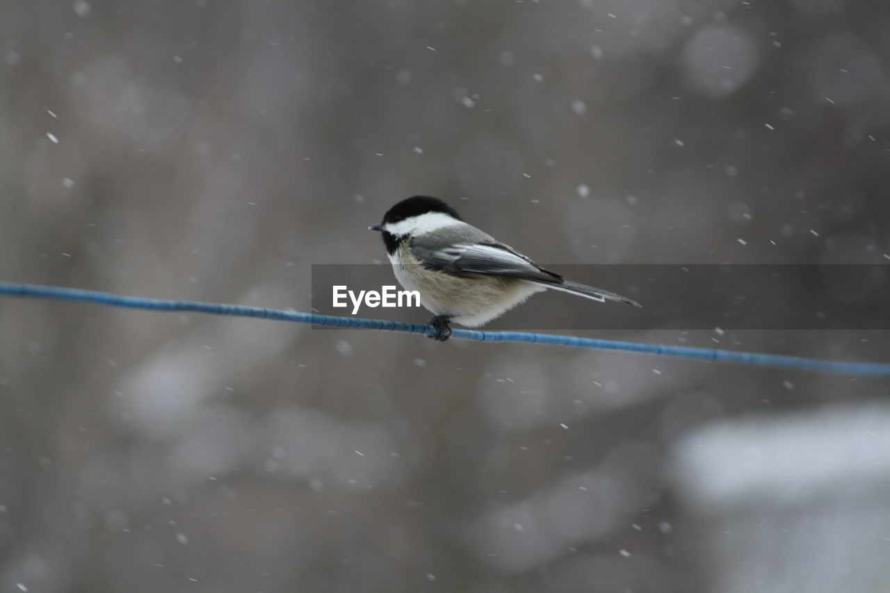 one animal, animal themes, animals in the wild, bird, animal wildlife, day, perching, no people, nature, outdoors, water, winter, beauty in nature, close-up