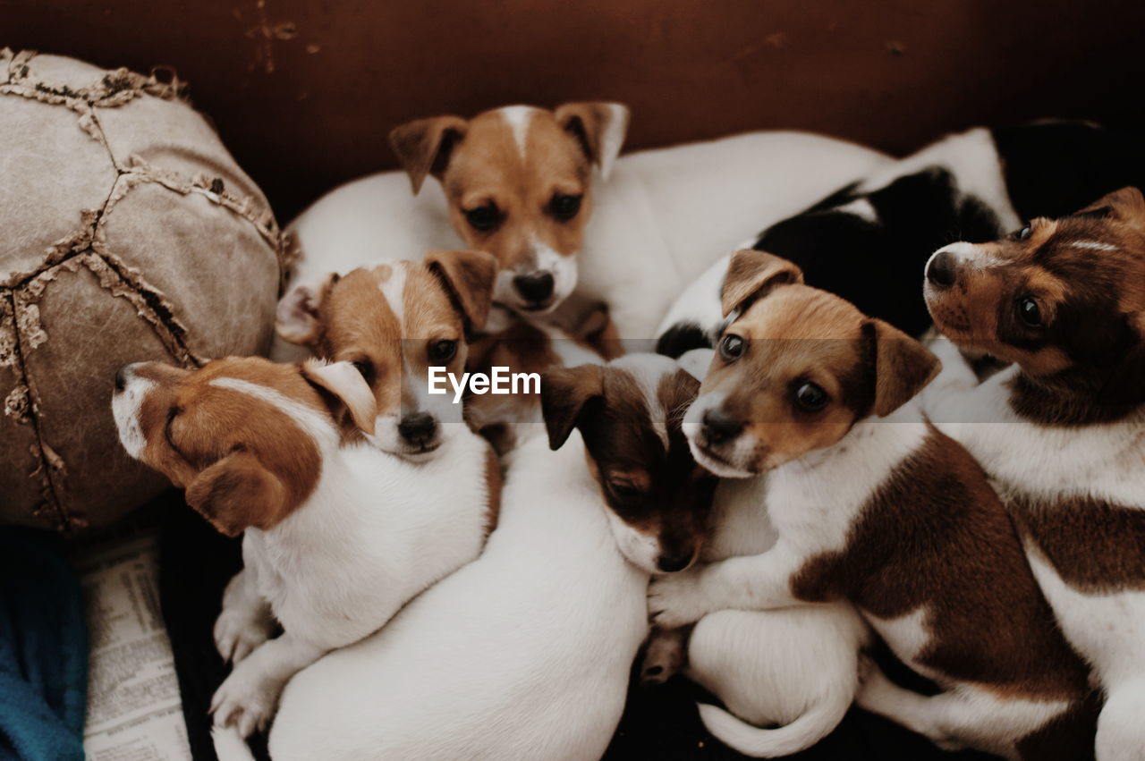 High angle view of tiny dogs
