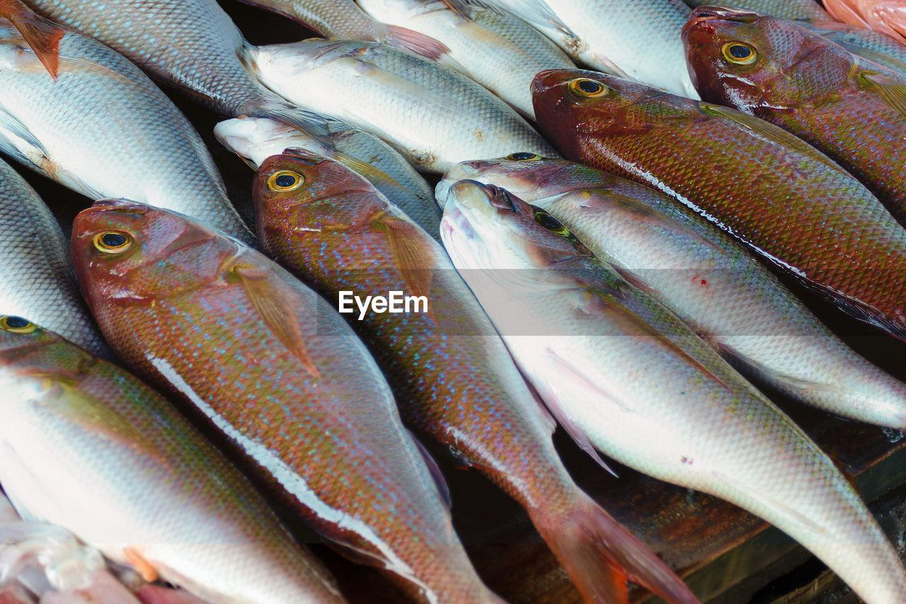 Sales stall - sea bass and tuna, close up. fresh fish at seafood market in sri lanka.