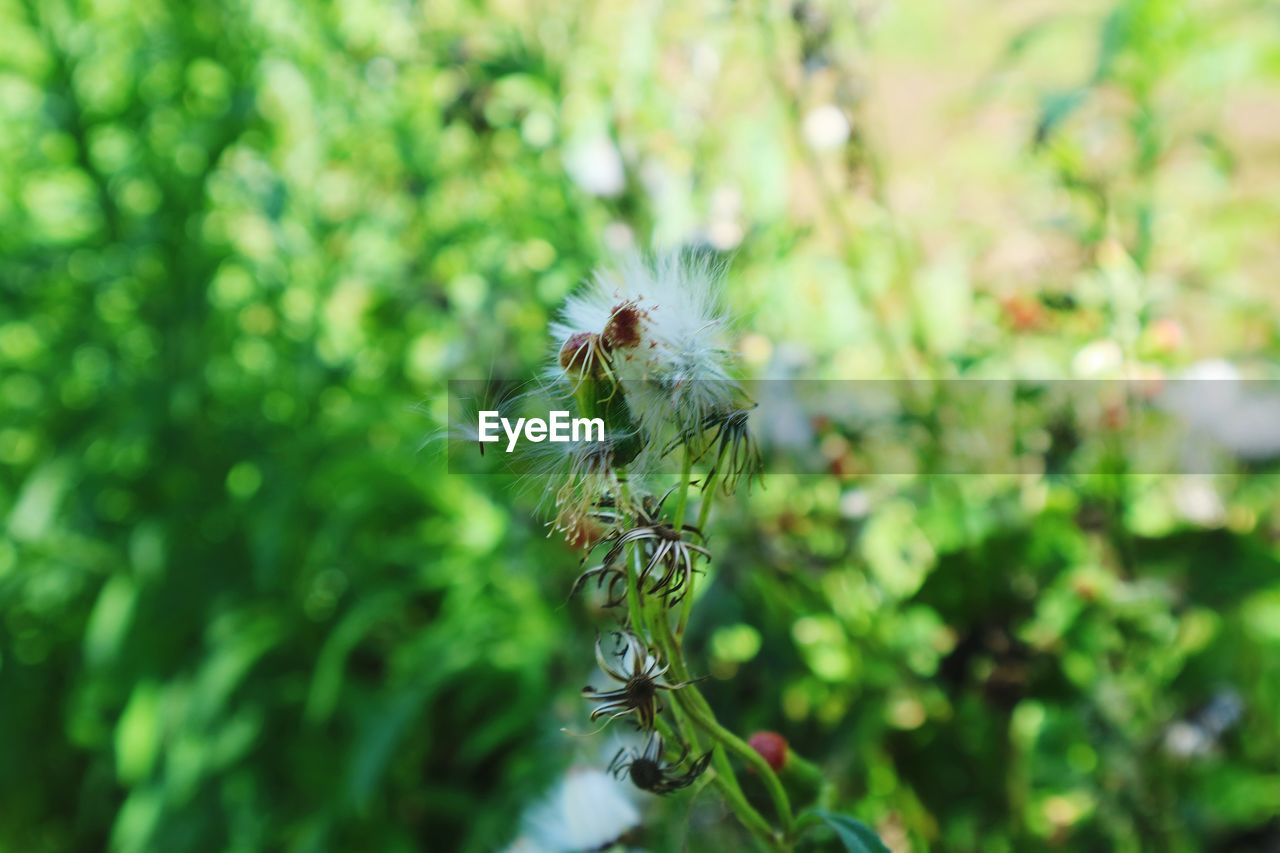 plant, beauty in nature, growth, flower, fragility, close-up, one animal, flowering plant, vulnerability, no people, invertebrate, nature, animal themes, animal, day, green color, freshness, focus on foreground, insect, selective focus, outdoors, flower head, pollination