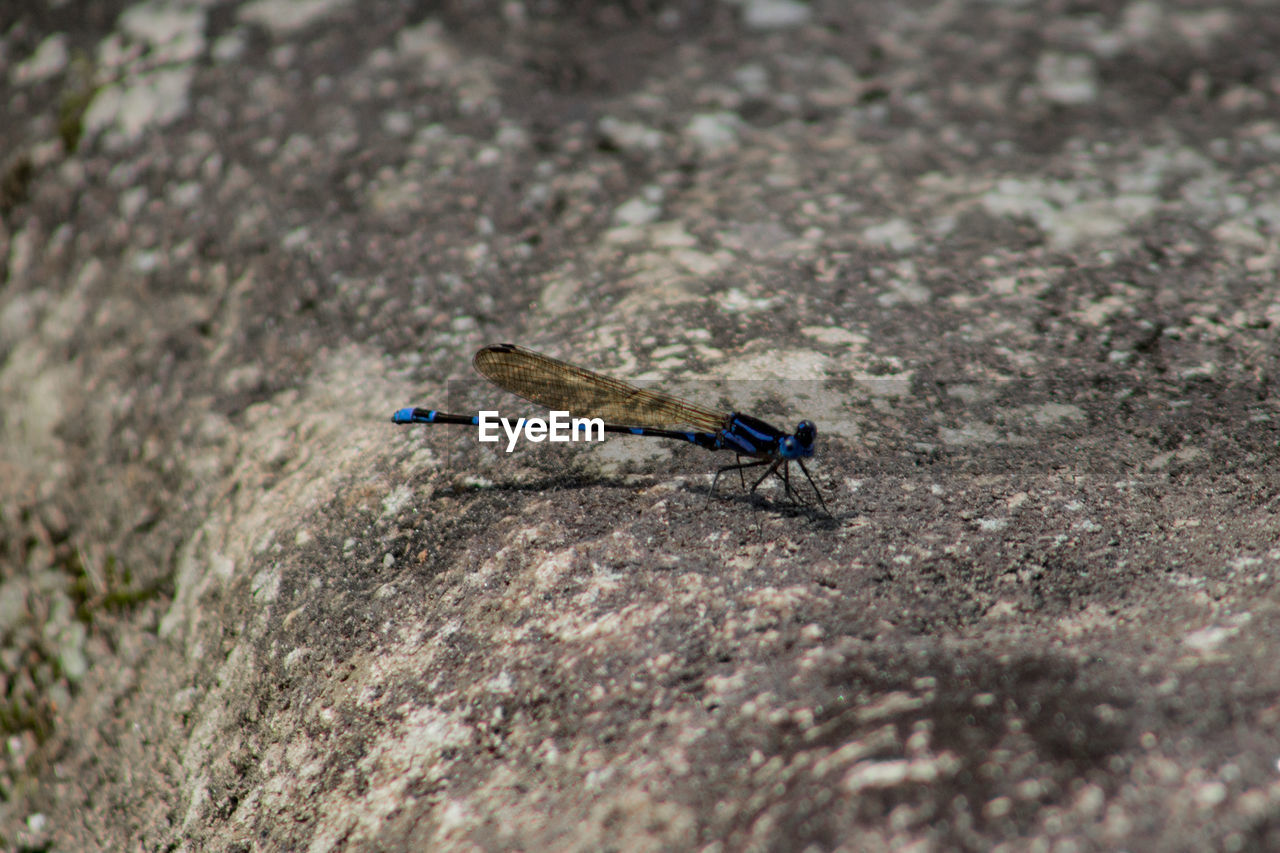 insect, animal themes, one animal, animals in the wild, outdoors, day, damselfly, no people, nature, close-up
