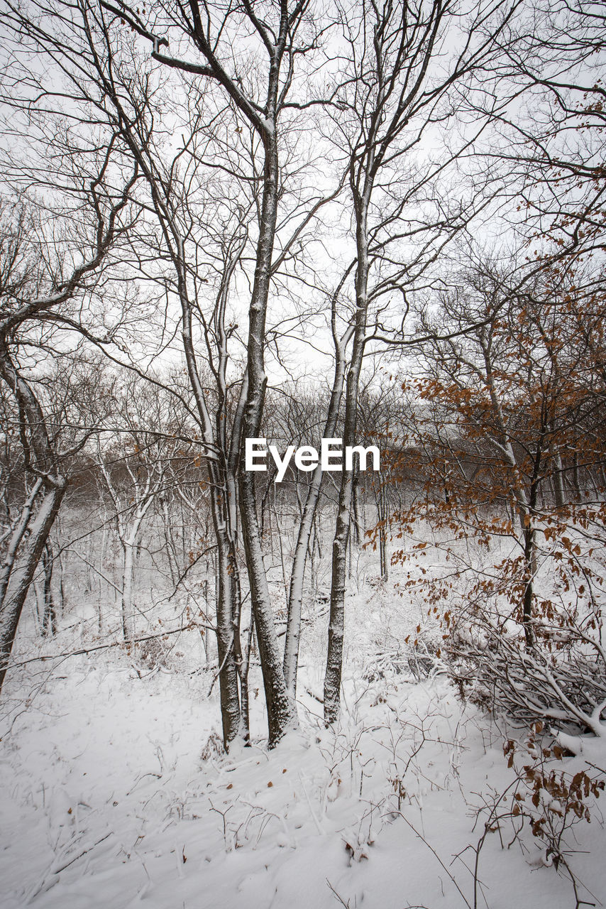 snow, tree, cold temperature, winter, plant, tranquility, bare tree, no people, branch, covering, beauty in nature, land, tranquil scene, nature, scenics - nature, frozen, non-urban scene, day, white color