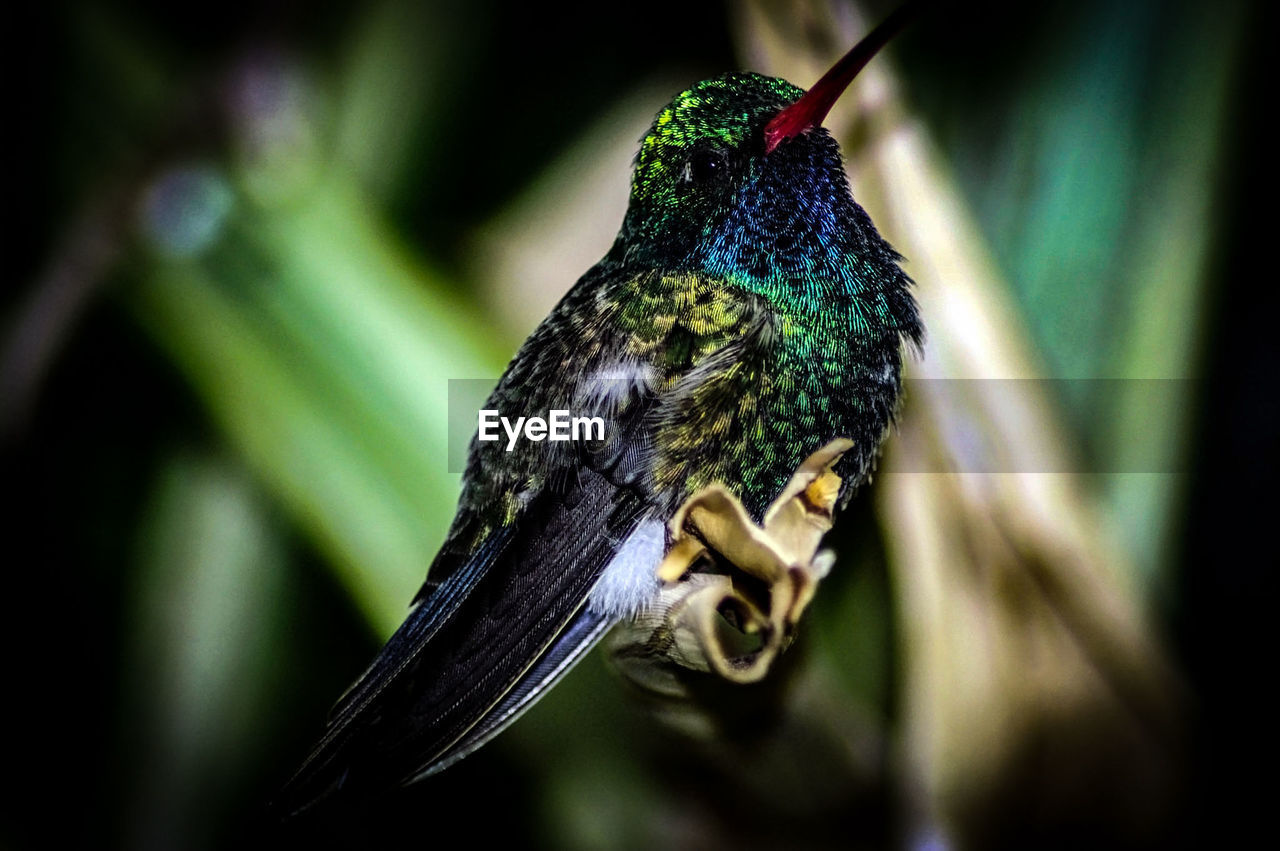 one animal, animal themes, animals in the wild, focus on foreground, bird, animal wildlife, no people, close-up, day, outdoors, nature, perching, beauty in nature