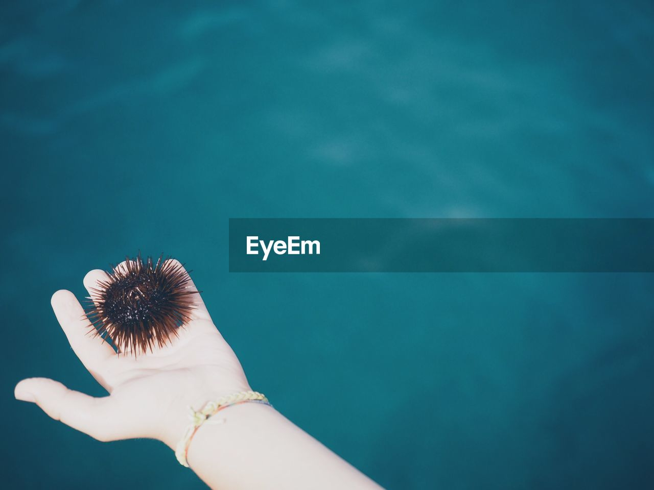 Cropped image of woman holding sea urchin over water