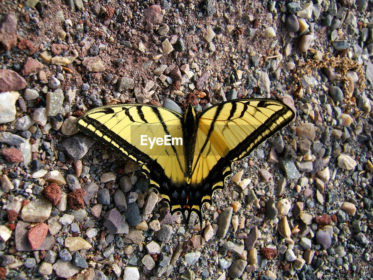 High Angle View Of Yellow Butterfly On Field