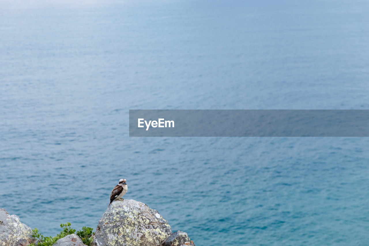 sea, water, animal, animal themes, one animal, solid, animal wildlife, animals in the wild, rock, rock - object, vertebrate, blue, beauty in nature, day, scenics - nature, bird, nature, no people, high angle view, outdoors, at the edge of