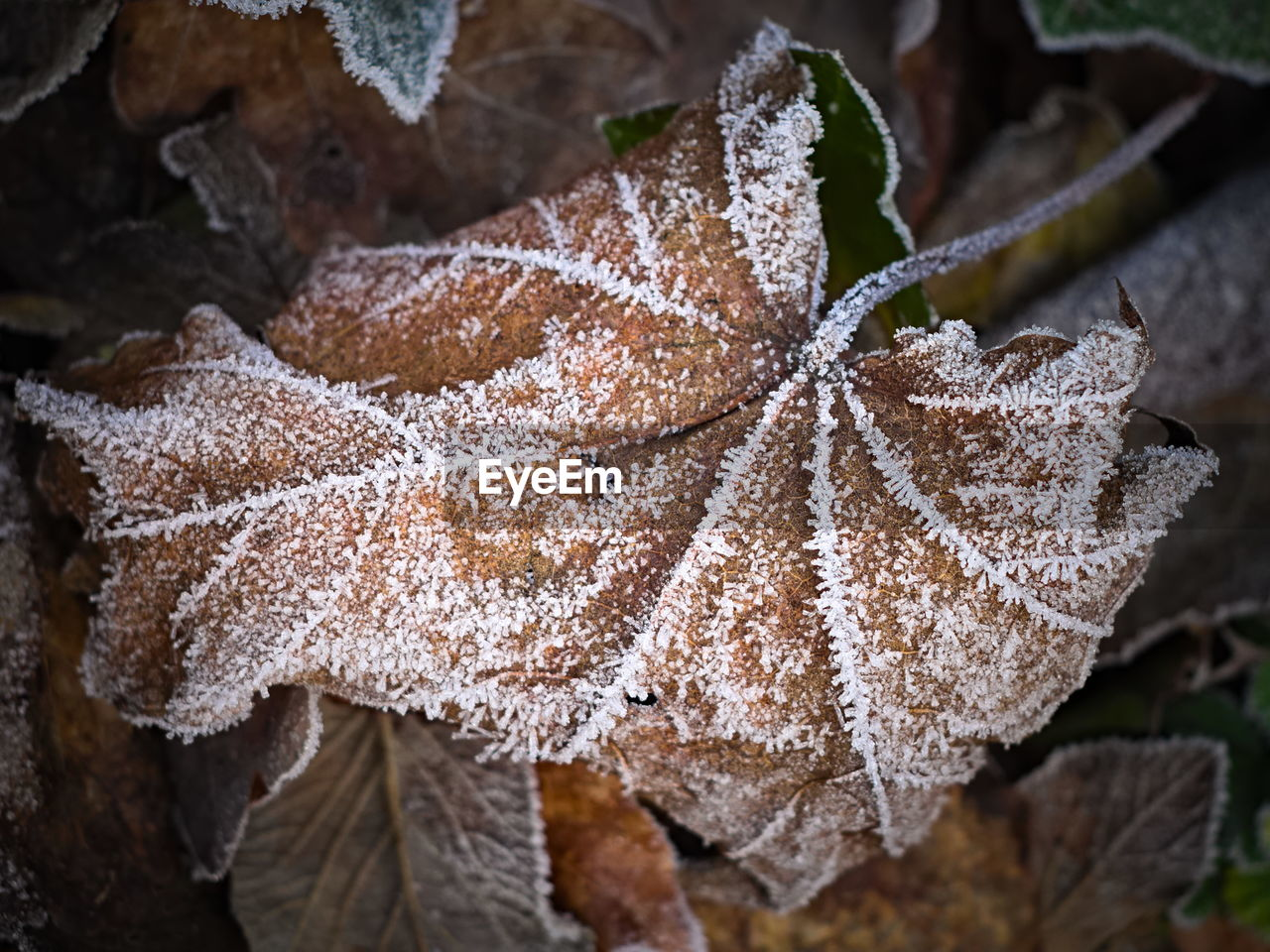 leaf, plant part, cold temperature, close-up, winter, nature, frost, plant, focus on foreground, beauty in nature, no people, frozen, growth, snow, day, ice, leaves, food, dry, outdoors