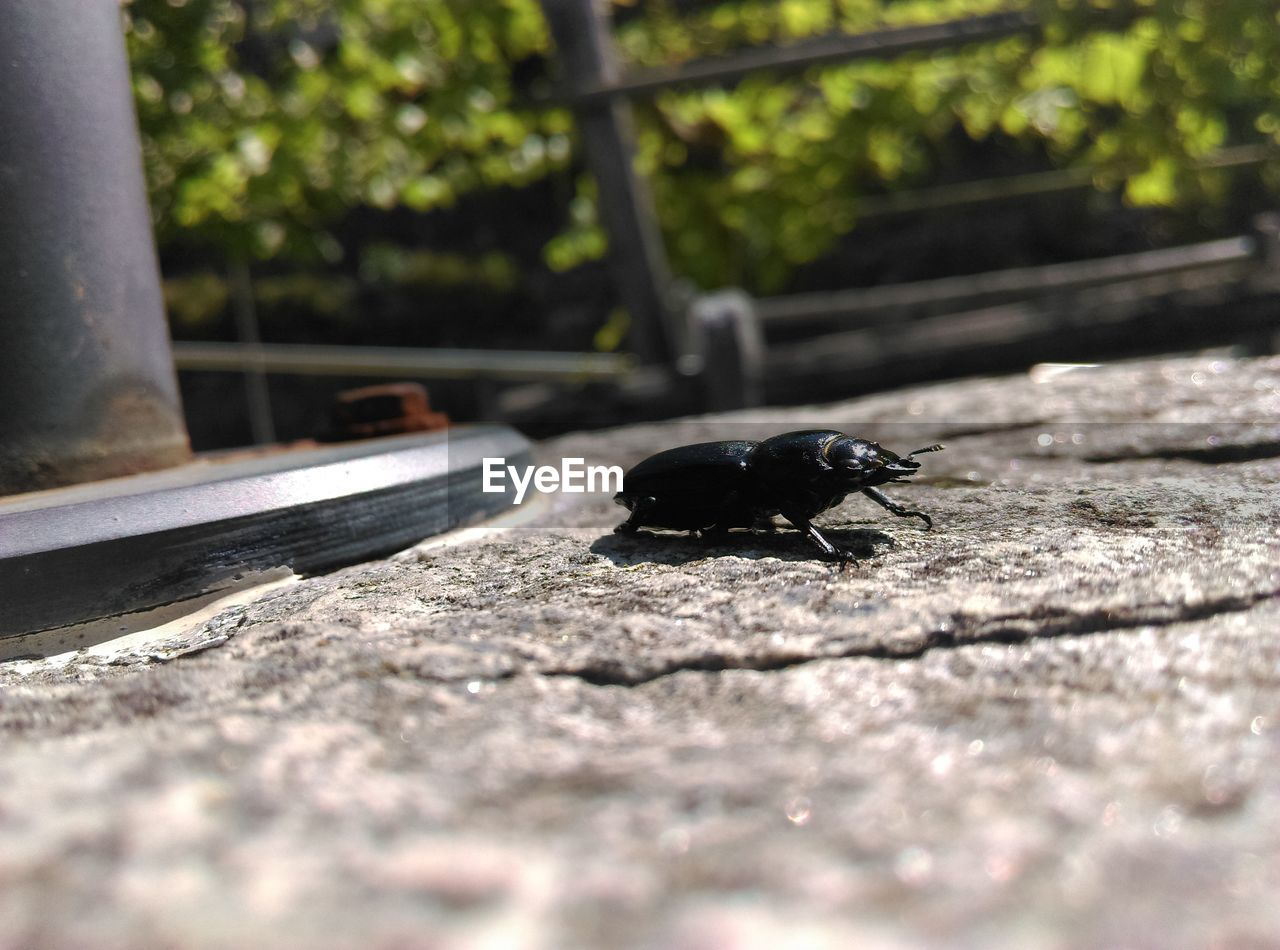 animal themes, one animal, animal, invertebrate, selective focus, insect, animals in the wild, animal wildlife, day, black color, no people, close-up, outdoors, sunlight, nature, beetle, tree, wood - material, zoology, mammal