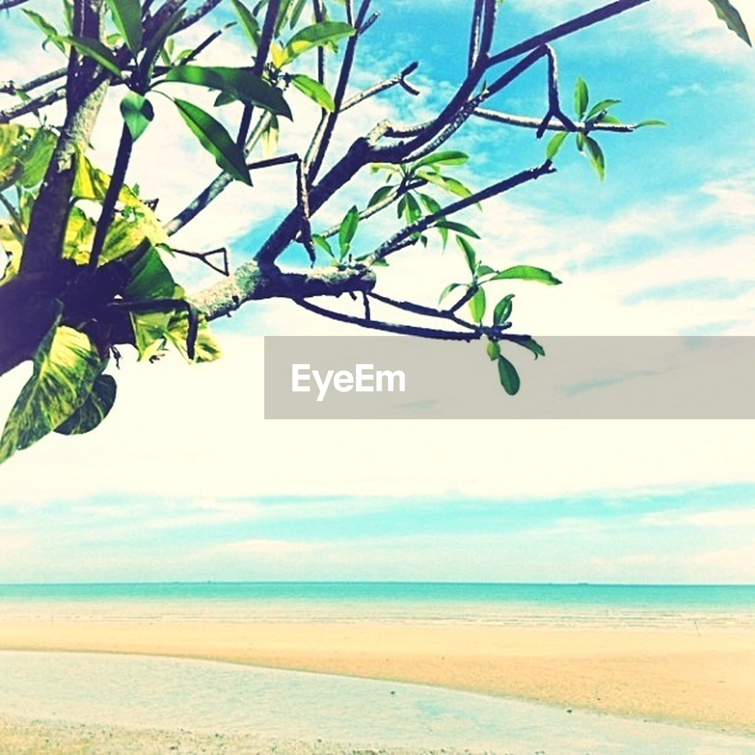 sea, horizon over water, sky, beach, water, tranquility, nature, beauty in nature, tree, growth, scenics, tranquil scene, leaf, shore, sand, branch, cloud, cloud - sky, day, sunlight