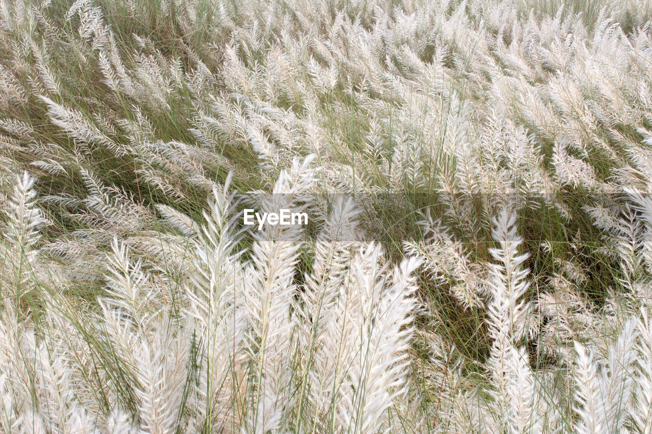 growth, agriculture, nature, field, crop, beauty in nature, backgrounds, cereal plant, plant, no people, tranquility, close-up, full frame, day, wheat, rural scene, ear of wheat, scenics, outdoors