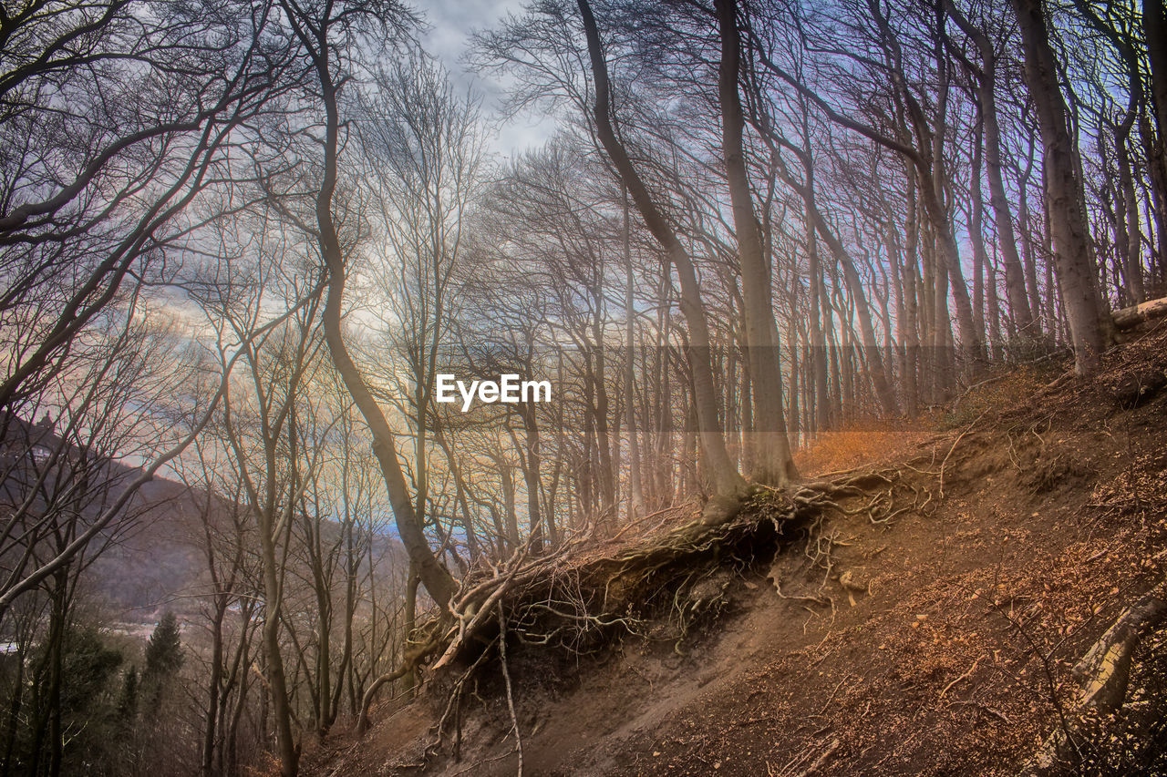 tree, nature, forest, bare tree, outdoors, no people, day, beauty in nature, branch, landscape, scenics, sky