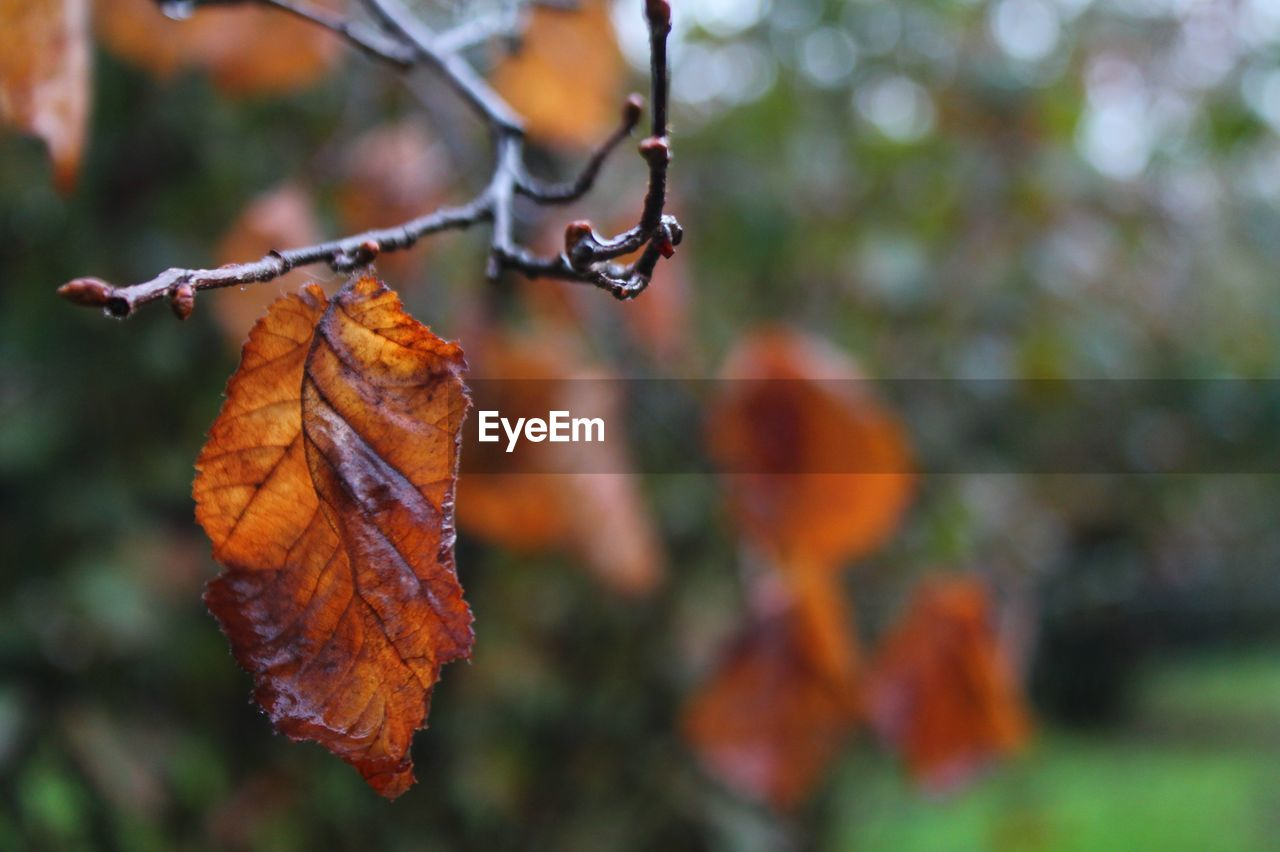 autumn, leaf, change, outdoors, focus on foreground, nature, orange color, day, beauty in nature, no people, close-up, tree, branch