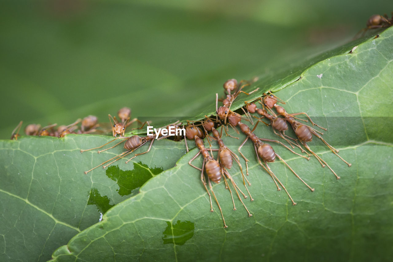 Close-Up Of Ants On Leaf