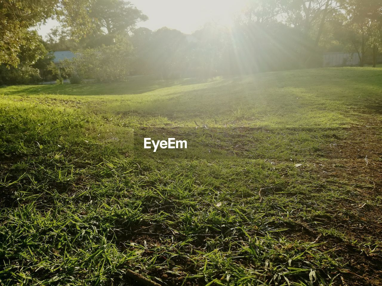 grass, nature, tranquility, tranquil scene, tree, sunbeam, field, growth, beauty in nature, sunlight, day, no people, outdoors, green color, landscape, scenics
