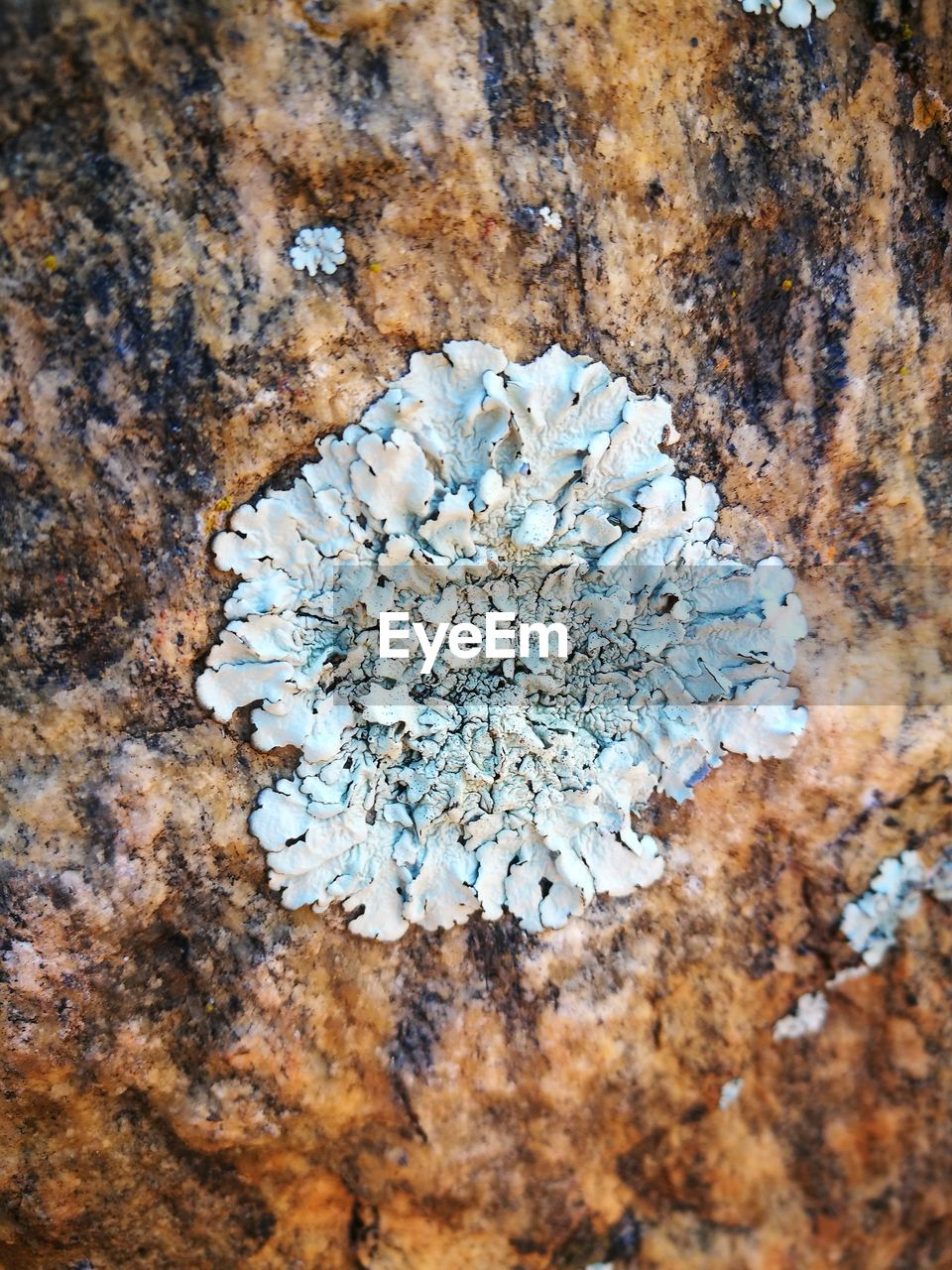 nature, close-up, no people, rock - object, beauty in nature, day, growth, lichen, outdoors, flower head, flower, fragility