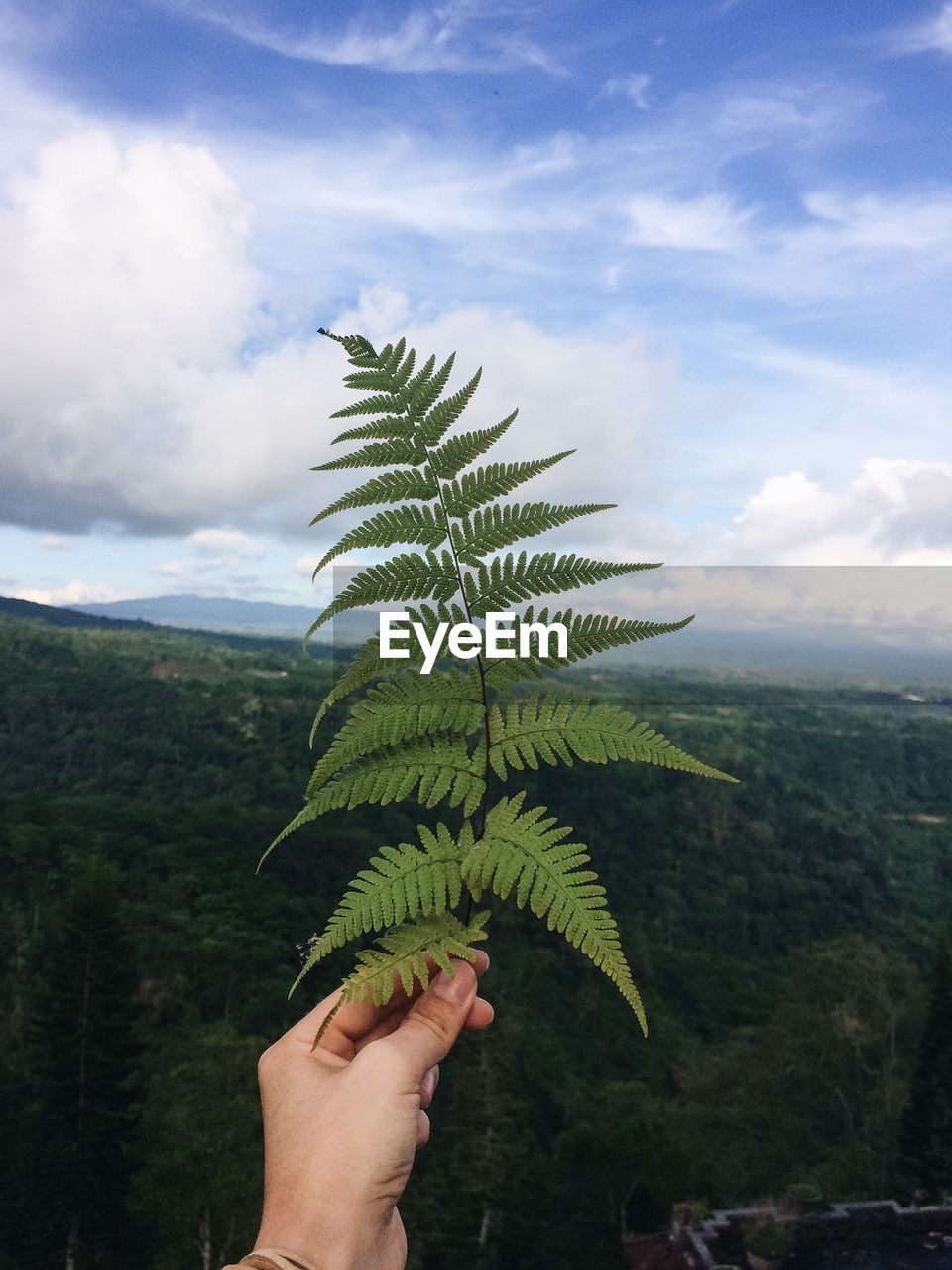 Cropped Hand Holding Ferns Against Sky