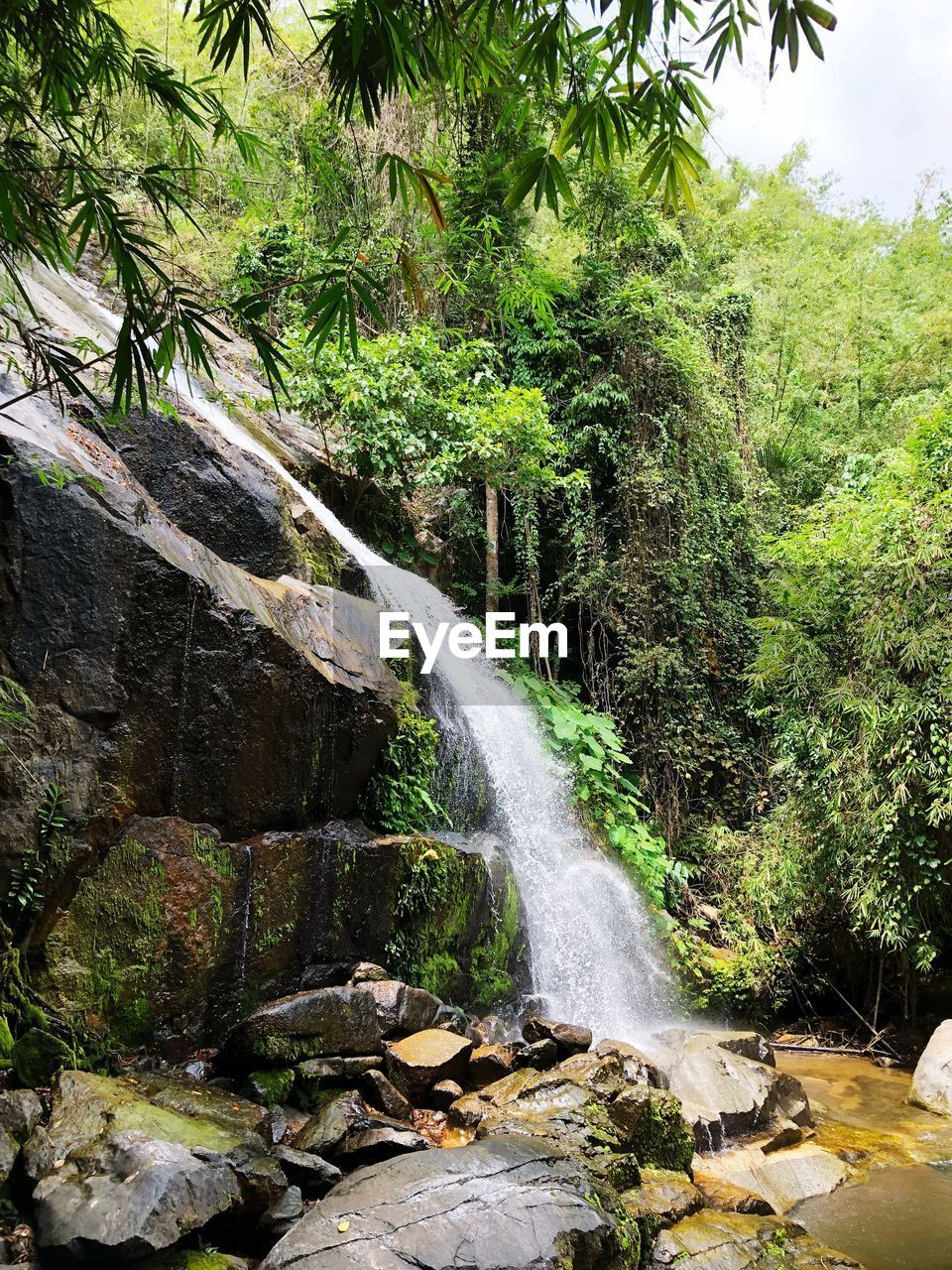 tree, plant, beauty in nature, water, scenics - nature, waterfall, rock, flowing water, land, motion, rock - object, solid, long exposure, forest, nature, growth, no people, green color, day, flowing, outdoors, rainforest, power in nature, falling water