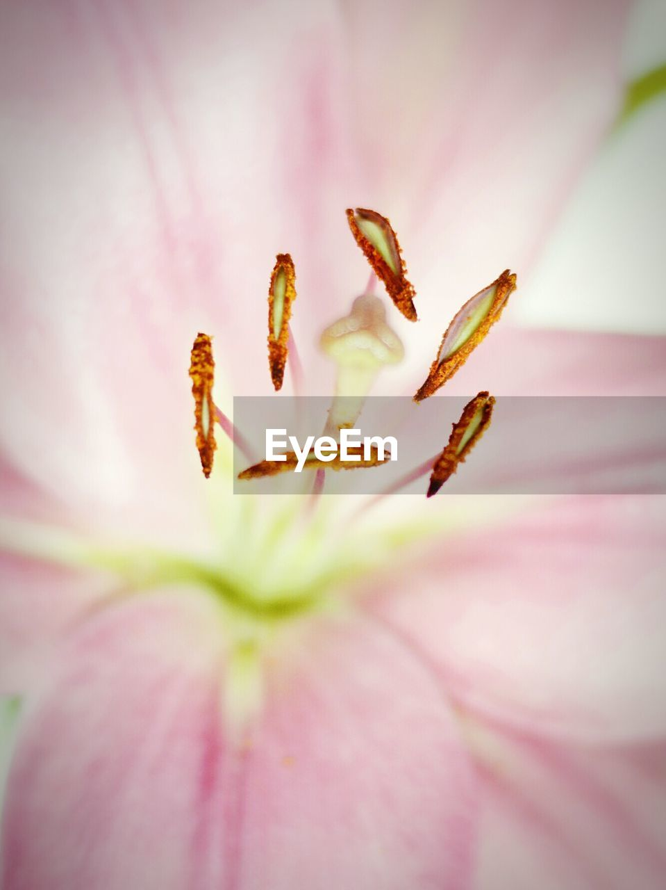 Full Frame Shot Of Pink Lily
