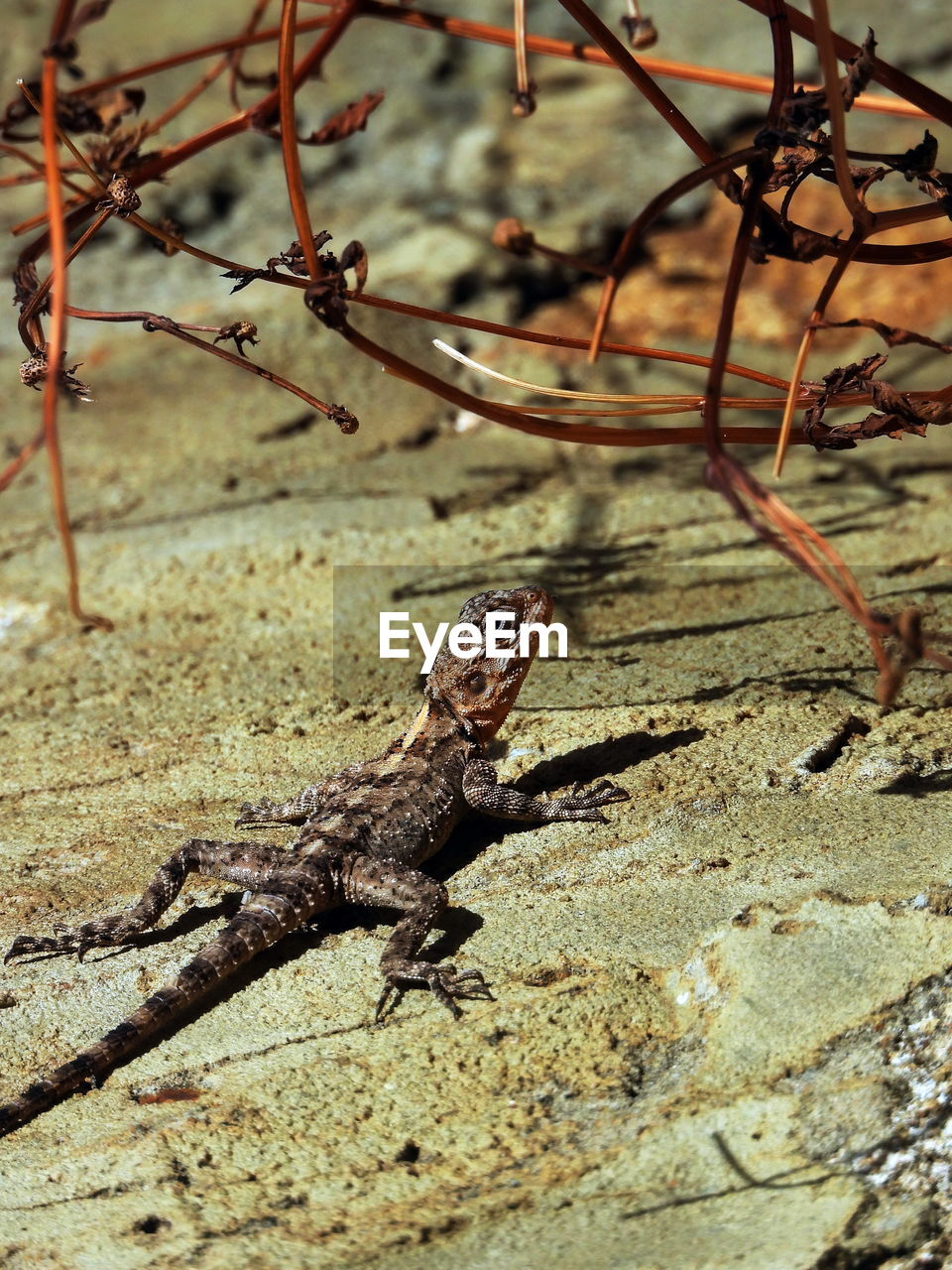 animal, animal themes, animal wildlife, animals in the wild, one animal, vertebrate, reptile, lizard, nature, no people, day, focus on foreground, tree, branch, plant, outdoors, sunlight, close-up, rock, selective focus