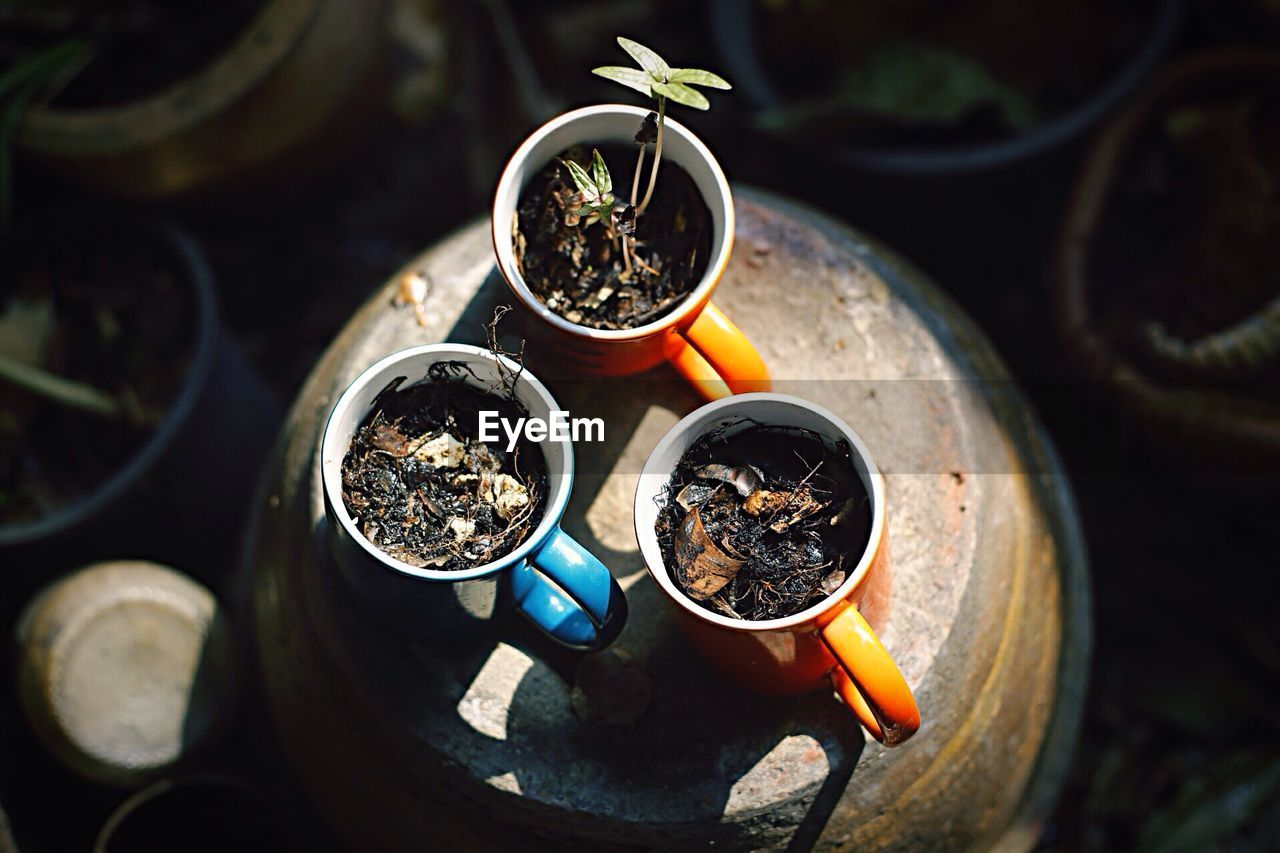 High angle view of seedlings in cup