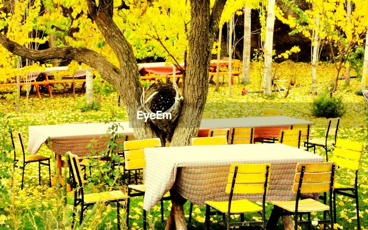 plant, seat, chair, tree, table, nature, absence, no people, growth, empty, day, yellow, trunk, tree trunk, sunlight, outdoors, furniture, park, bench, beauty in nature