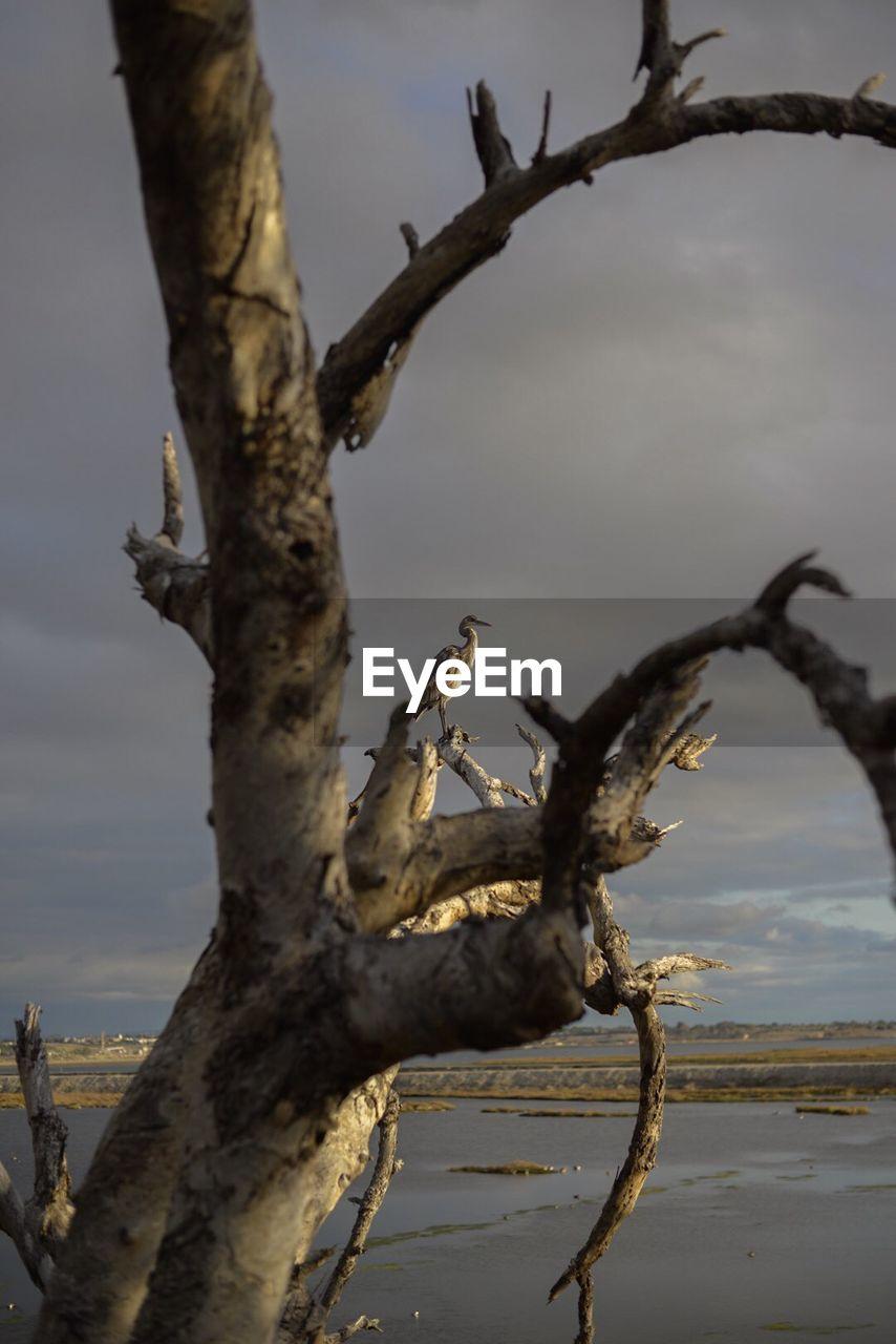 Bird Perching On Dry Tree At Sea Shore