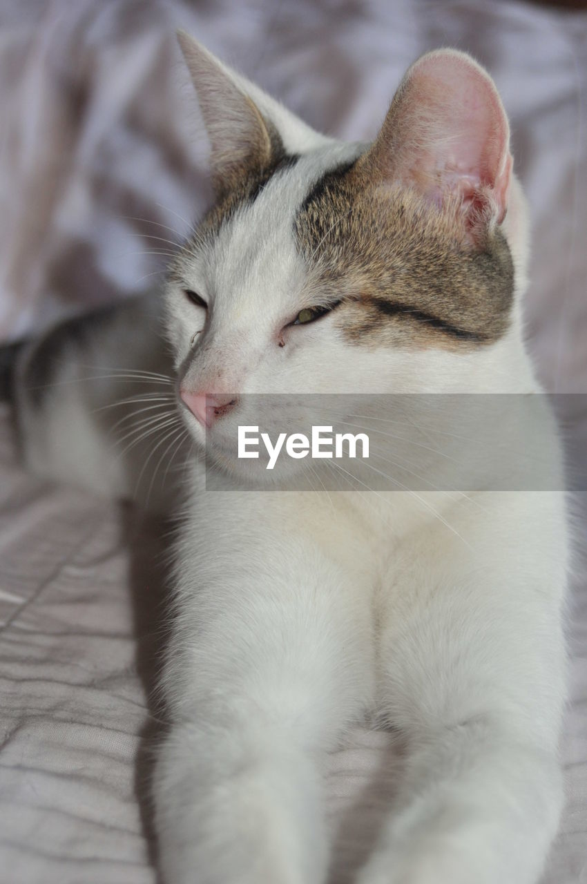 domestic, pets, mammal, domestic animals, animal, animal themes, domestic cat, cat, one animal, feline, vertebrate, eyes closed, relaxation, close-up, indoors, sleeping, no people, bed, resting, home interior, whisker, animal head