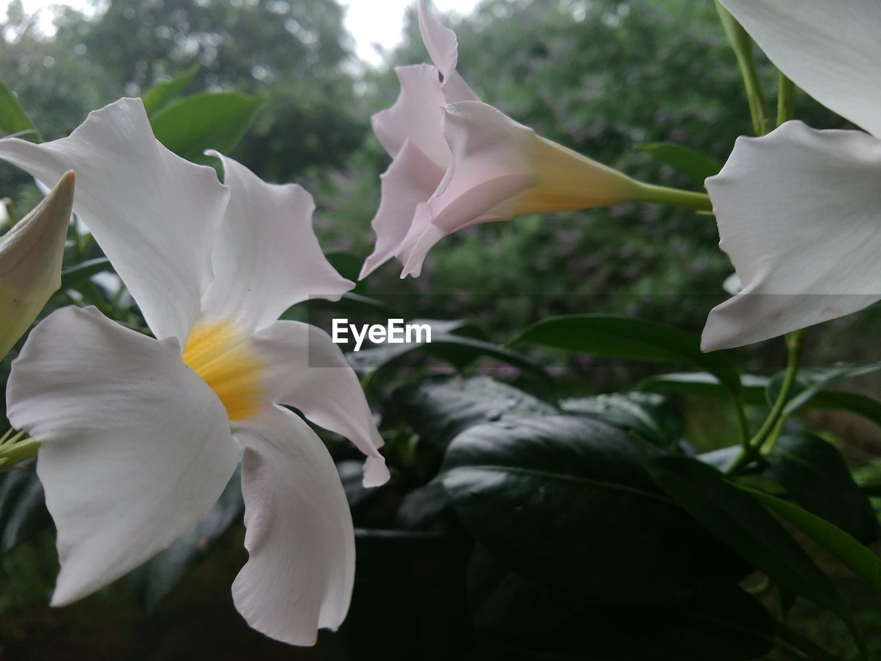 petal, flower, fragility, flower head, growth, beauty in nature, nature, white color, blooming, plant, freshness, outdoors, close-up, no people, day, iris - plant, springtime, tree, day lily