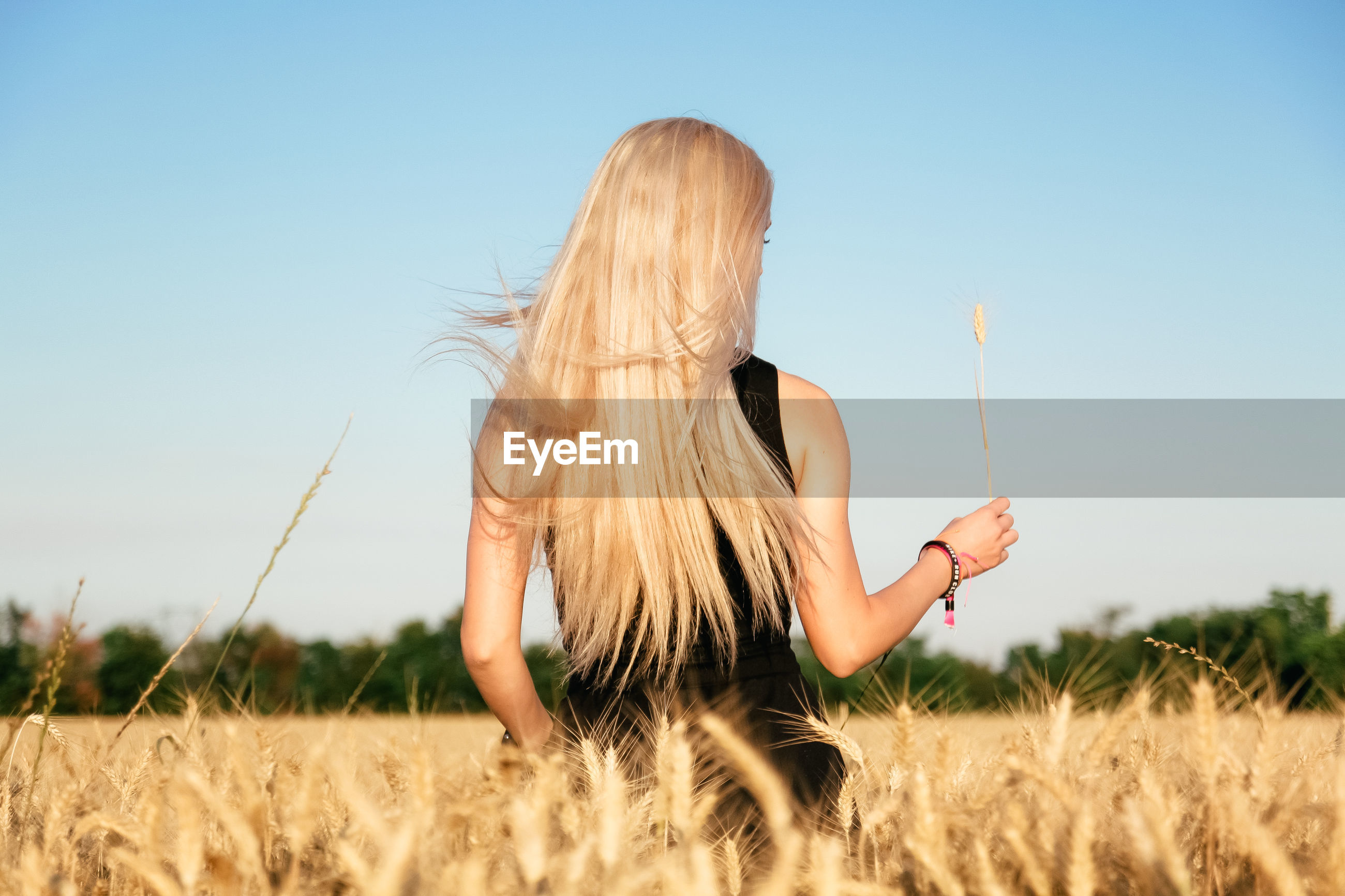 Rear view of woman holding plant while standing in wheat farm against clear sky