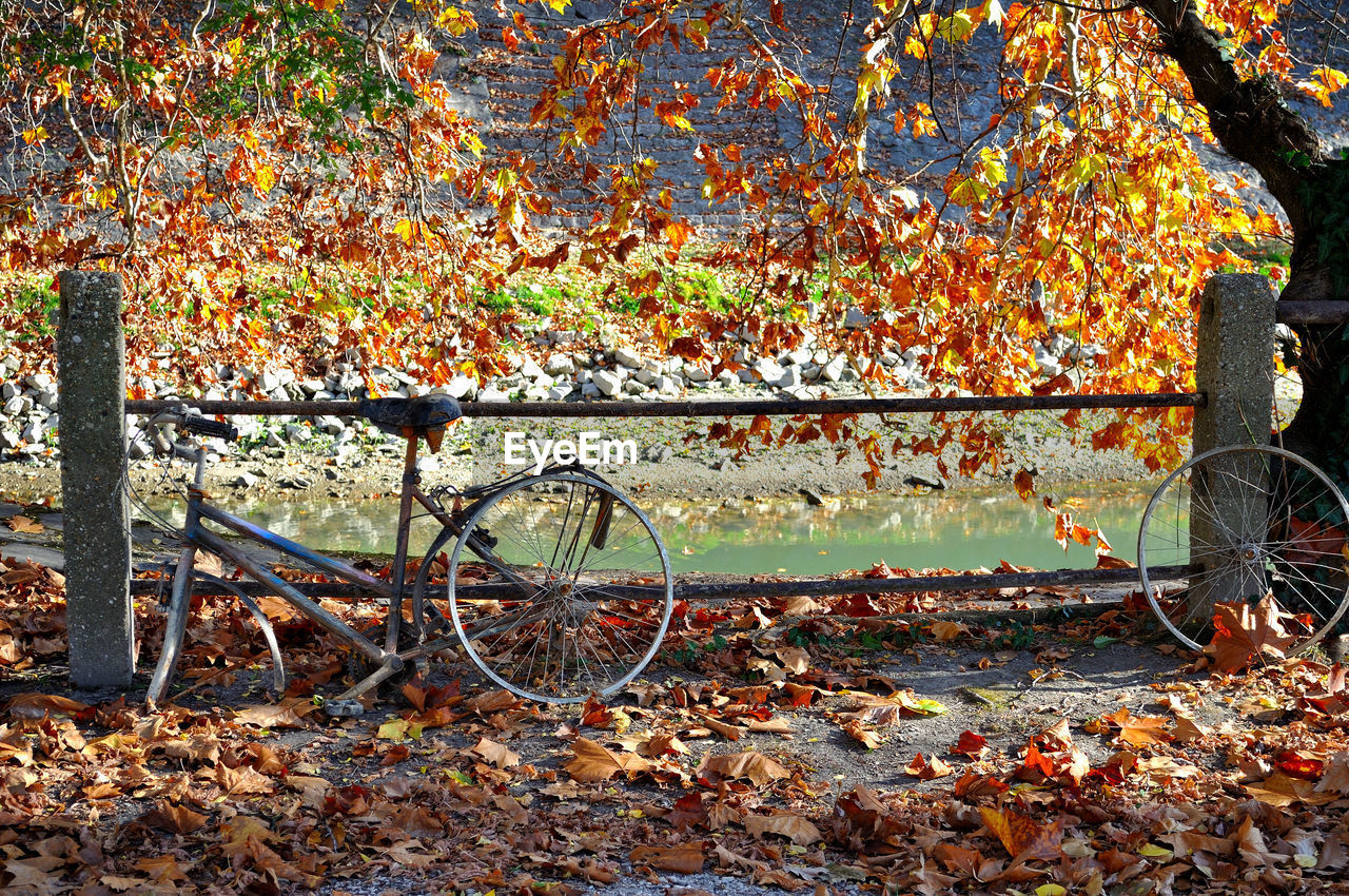 autumn, leaf, plant part, change, orange color, transportation, nature, day, tree, leaves, land, mode of transportation, no people, plant, falling, field, land vehicle, dry, outdoors, growth, wheel, autumn collection, fall