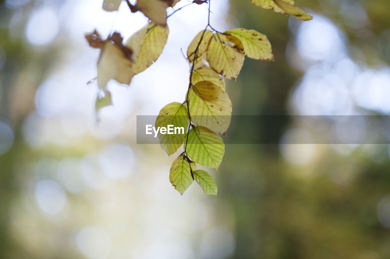 leaf, plant, plant part, focus on foreground, growth, close-up, no people, beauty in nature, day, nature, tree, green color, leaves, sunlight, selective focus, outdoors, tranquility, branch, yellow, change