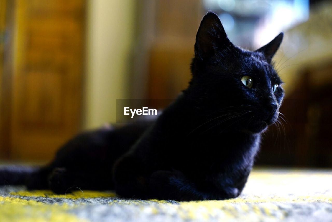CLOSE-UP OF BLACK CAT SITTING ON FLOOR