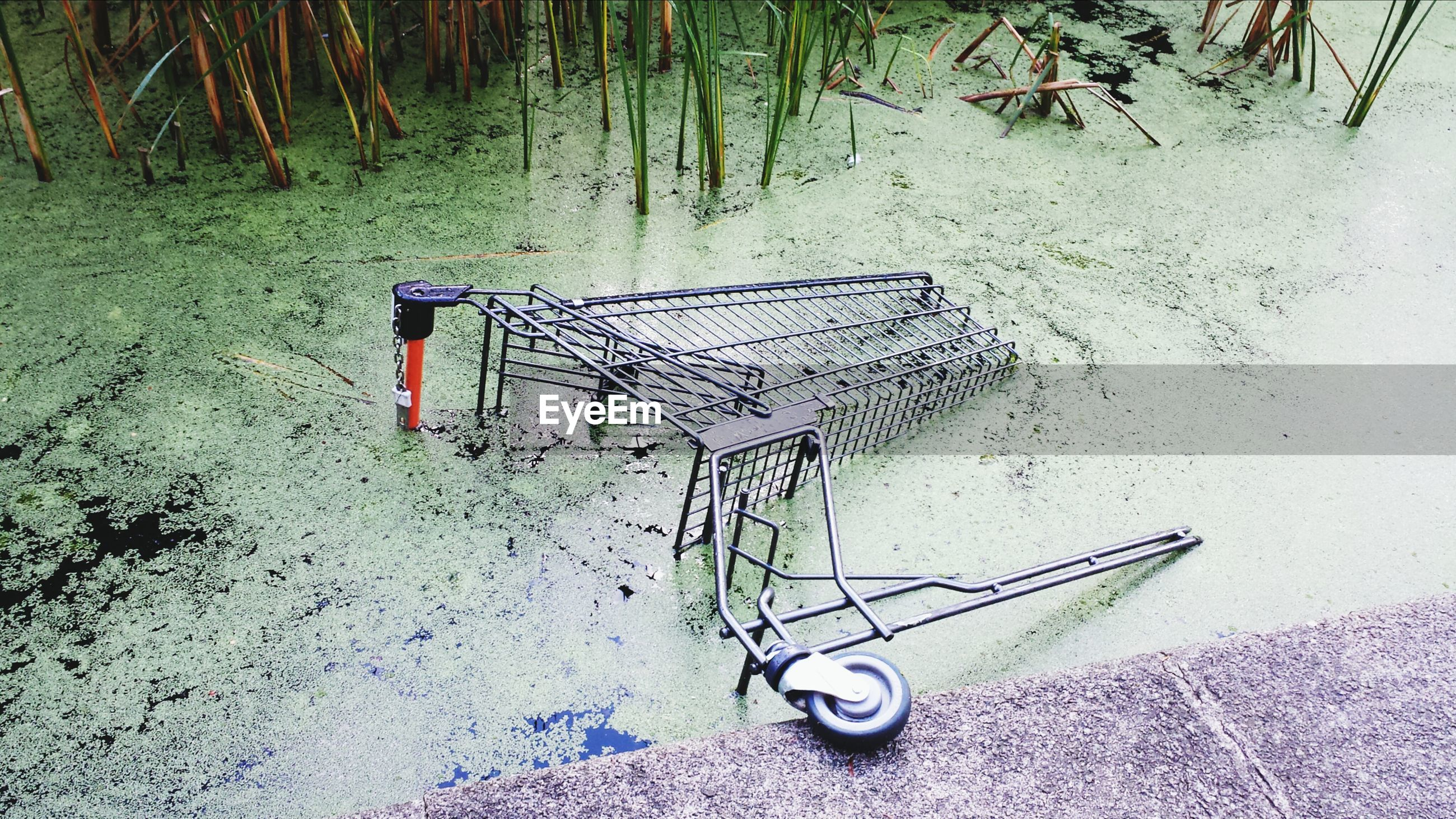 Shopping cart in pond
