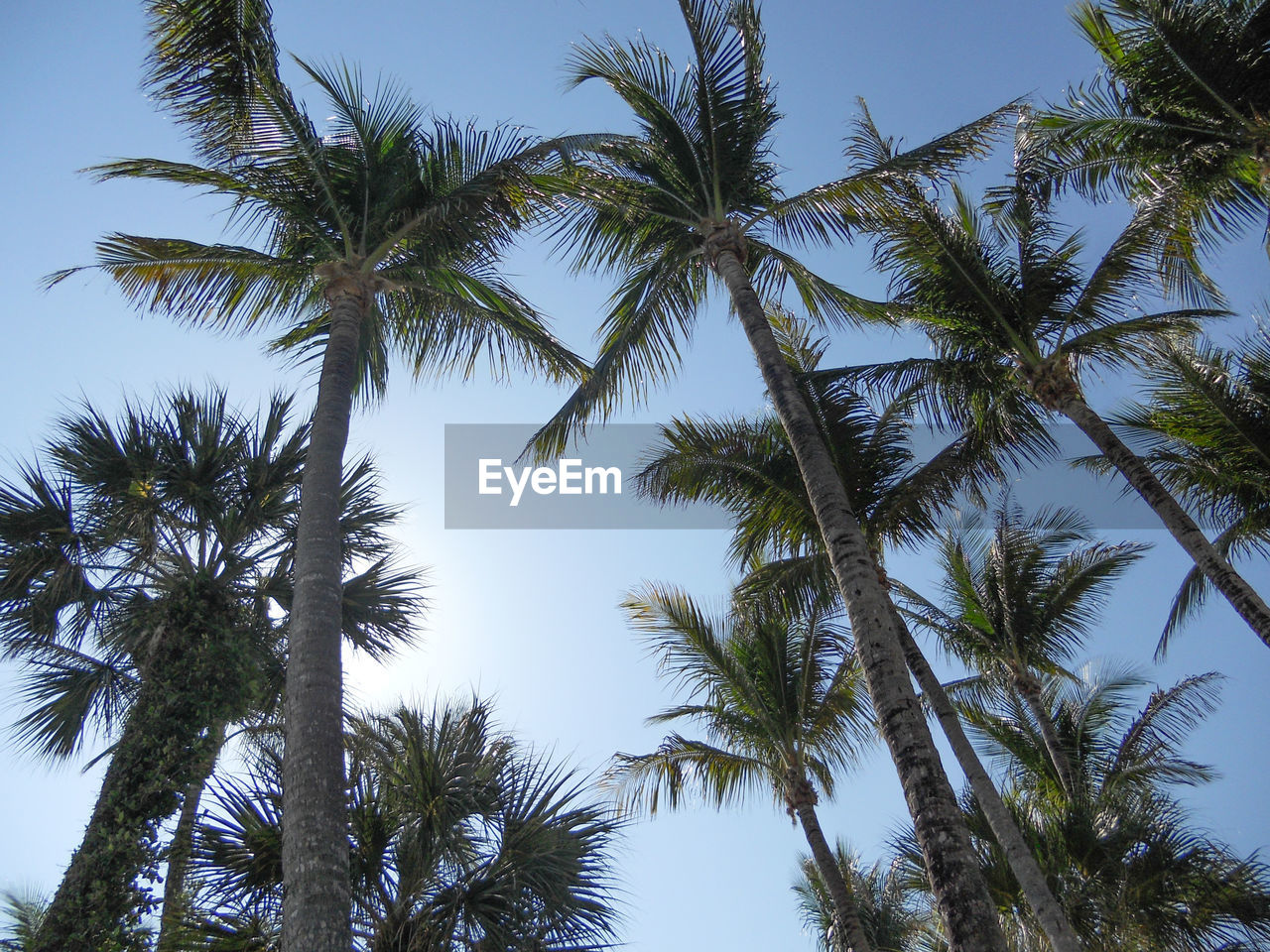 low angle view, palm tree, tree, nature, tree trunk, sky, growth, beauty in nature, day, no people, outdoors, clear sky, tranquility, scenics
