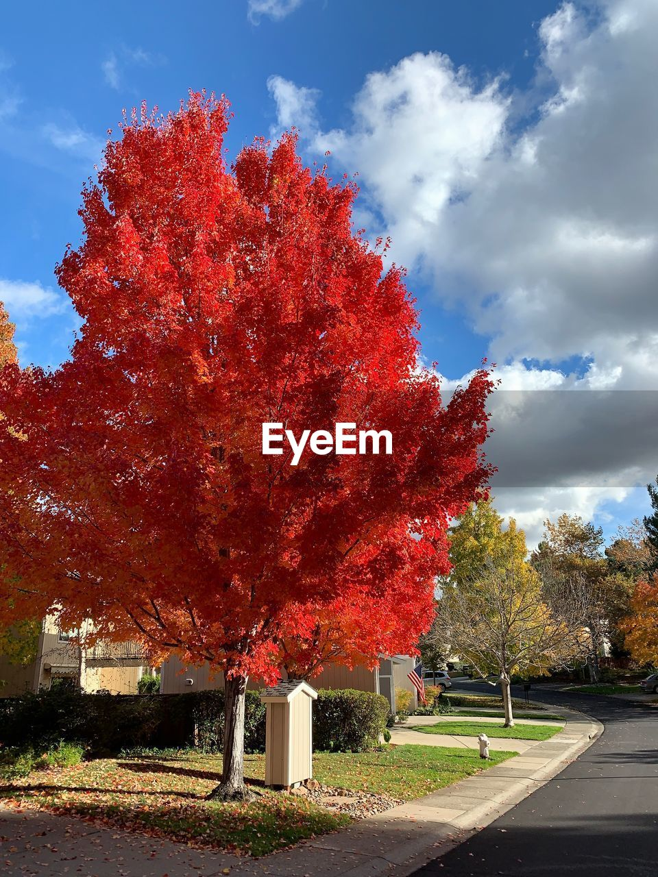 tree, plant, cloud - sky, change, autumn, sky, nature, red, growth, no people, day, beauty in nature, outdoors, sunlight, orange color, road, flowering plant, transportation, flower, street, fall