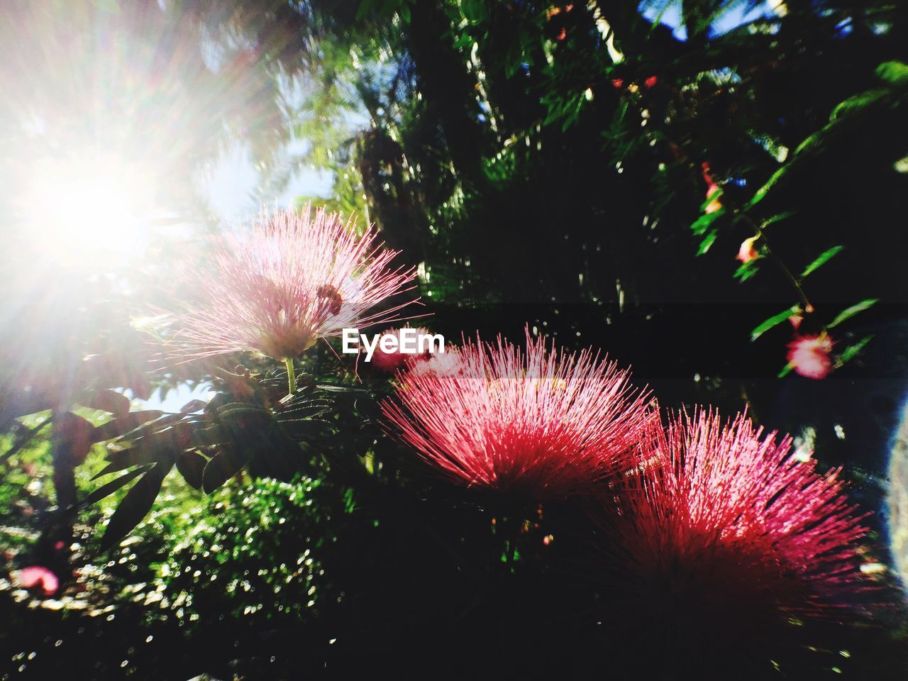 growth, nature, low angle view, no people, tree, beauty in nature, sunlight, outdoors, flower, close-up, sky, day, fragility, freshness