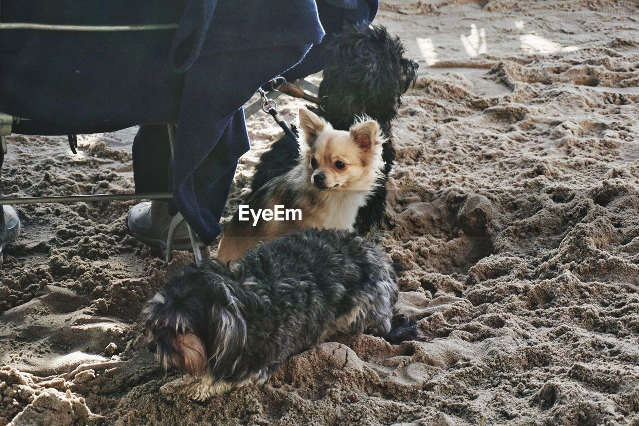 Dogs At Sandy Beach