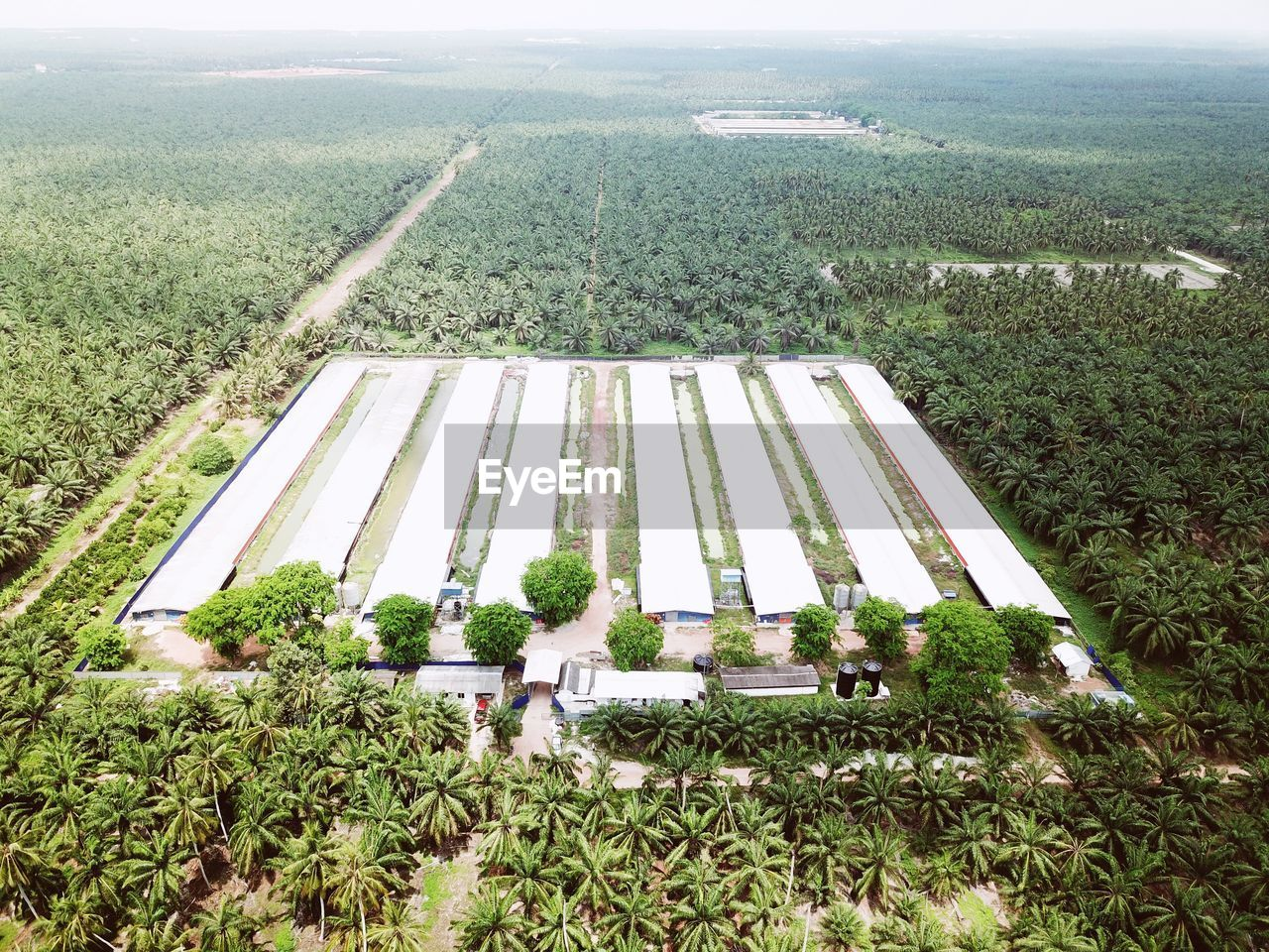 HIGH ANGLE VIEW OF AGRICULTURAL FIELD AGAINST TREES